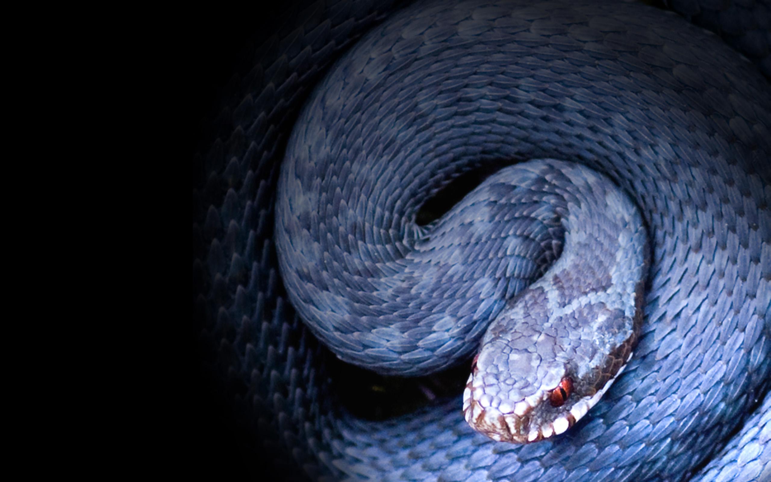 змея ультрафиолет без смс