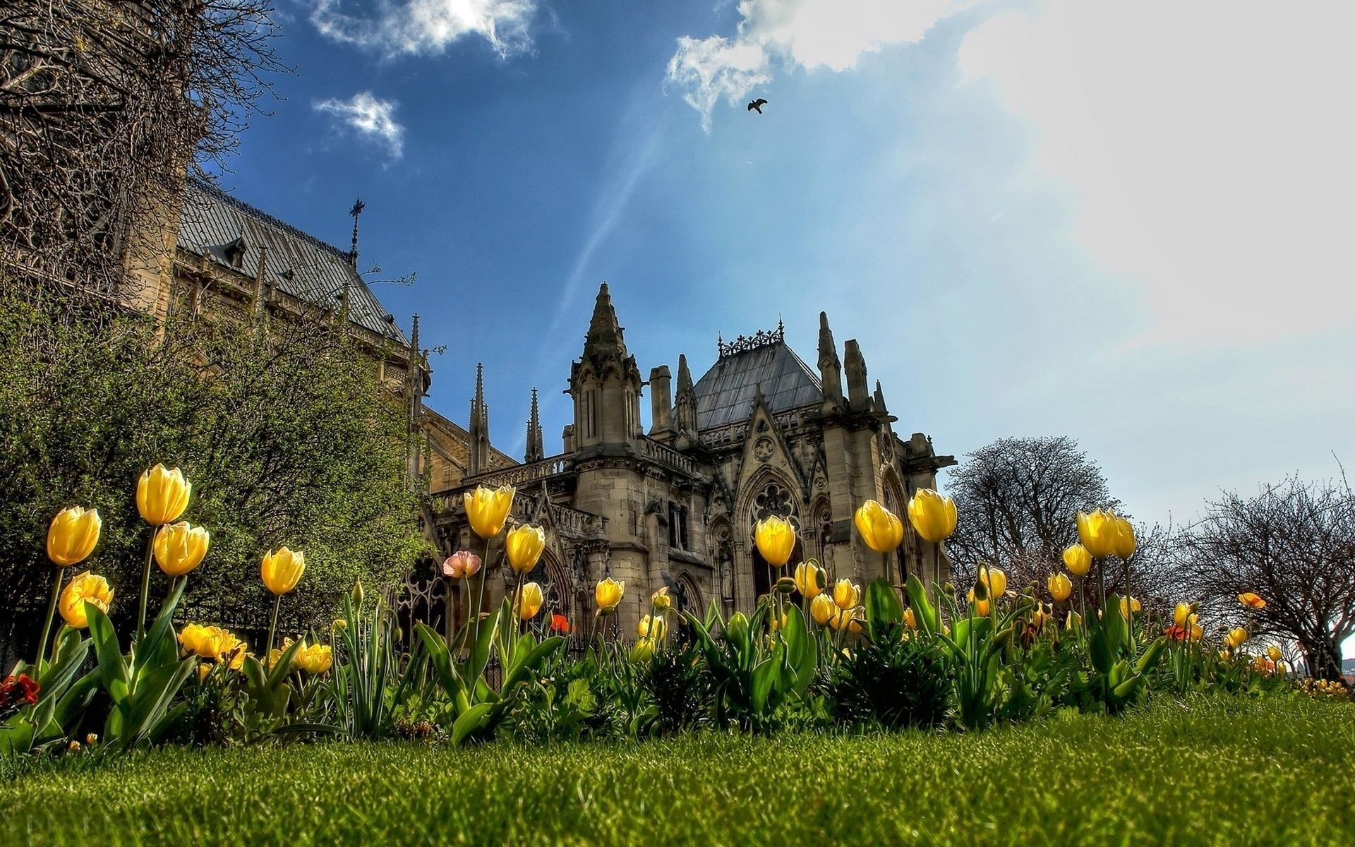 архитектура страны цветы тюльпаны желтые пейзаж  № 2568572 бесплатно