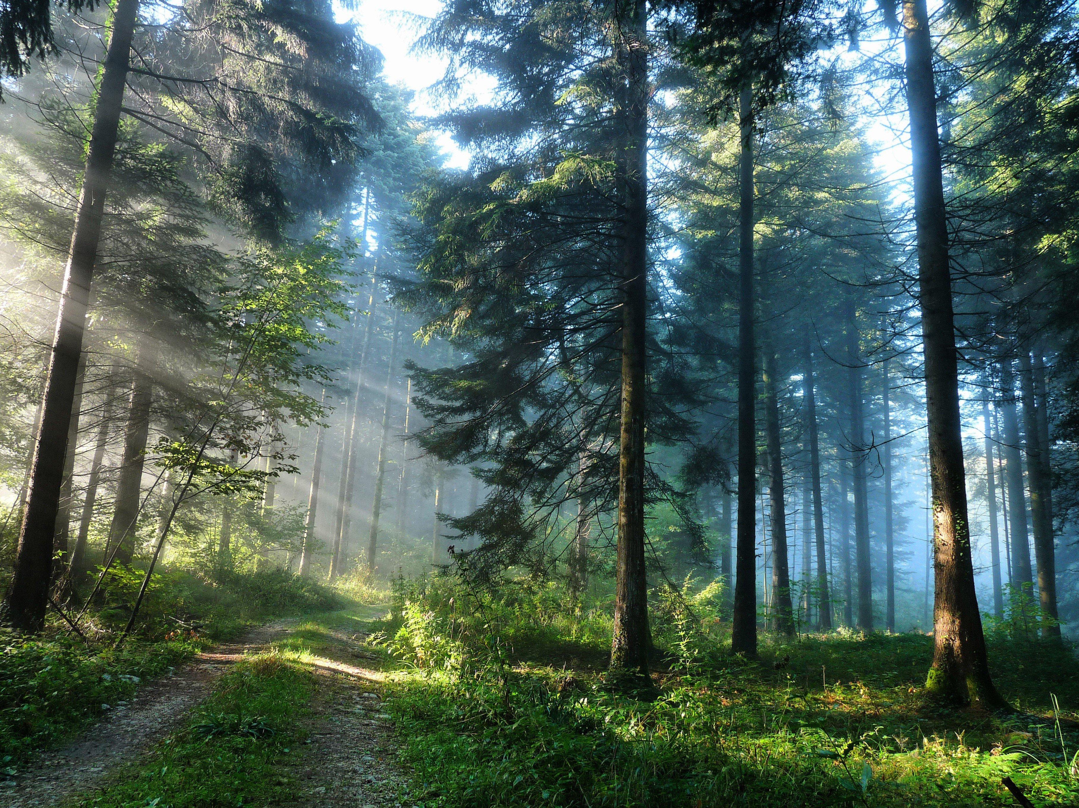 Красивые обои на рабочий стол природа лес