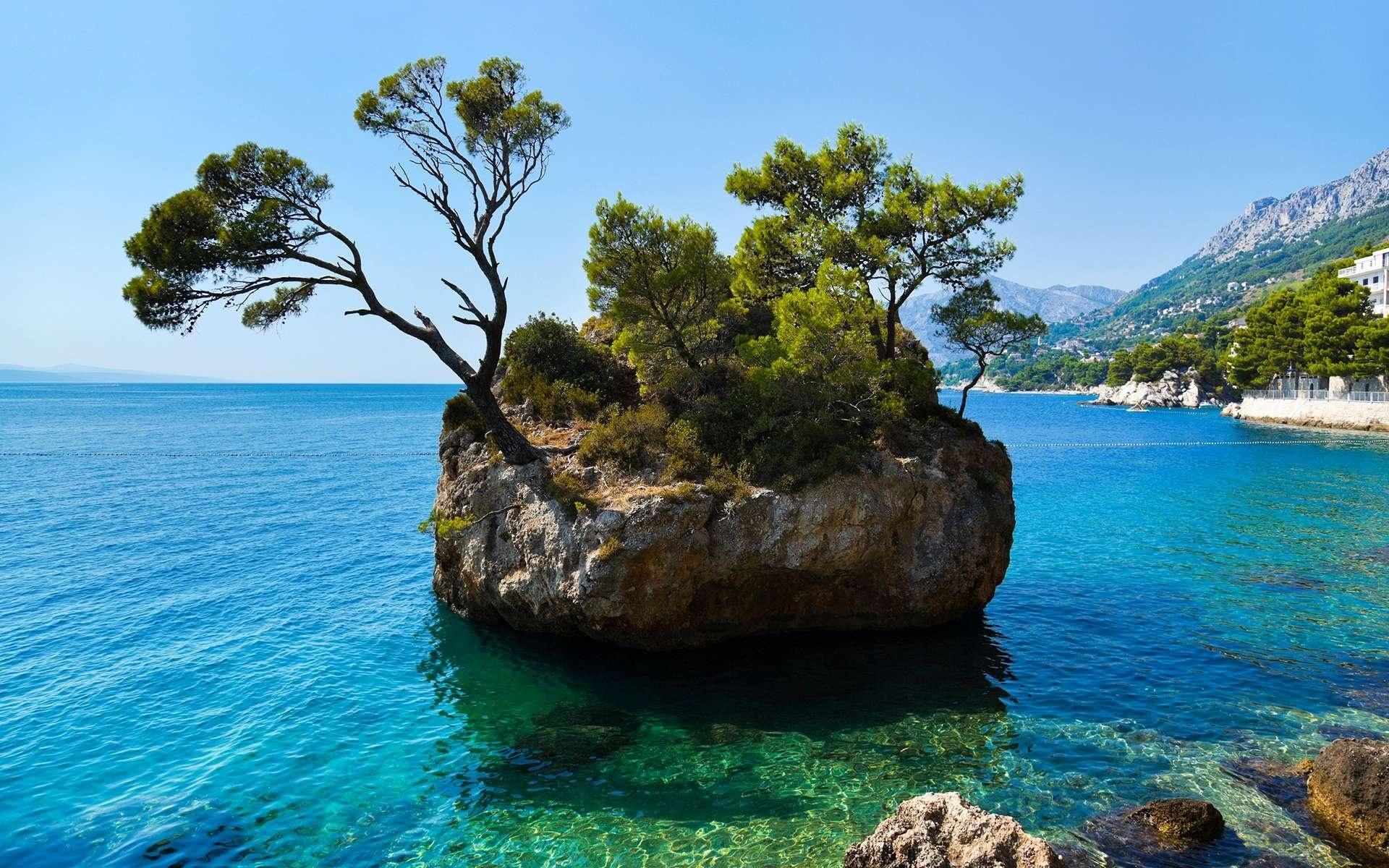 природа море остров деревья бесплатно