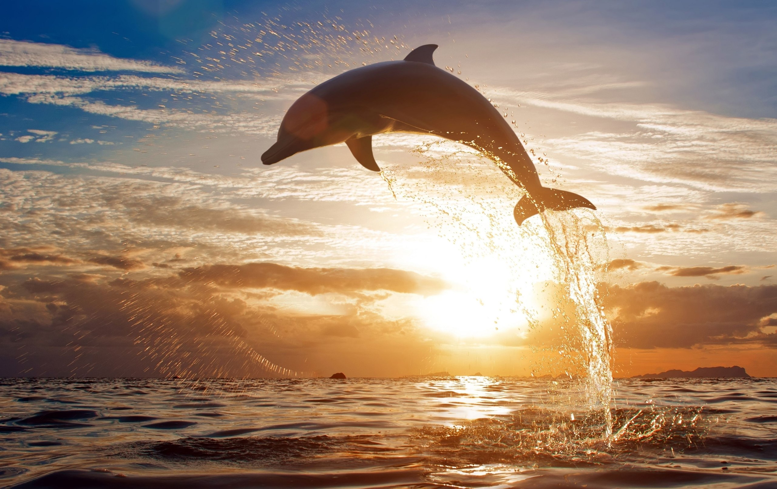 природа животные дельфины море загрузить