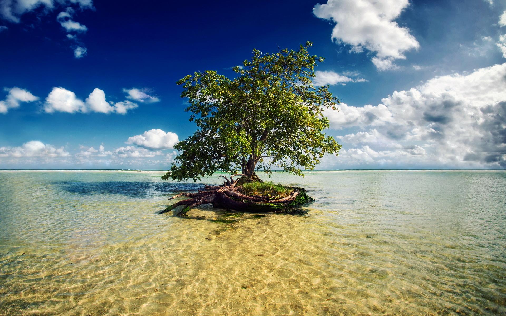 Море вода деревья облака  № 1034907 без смс