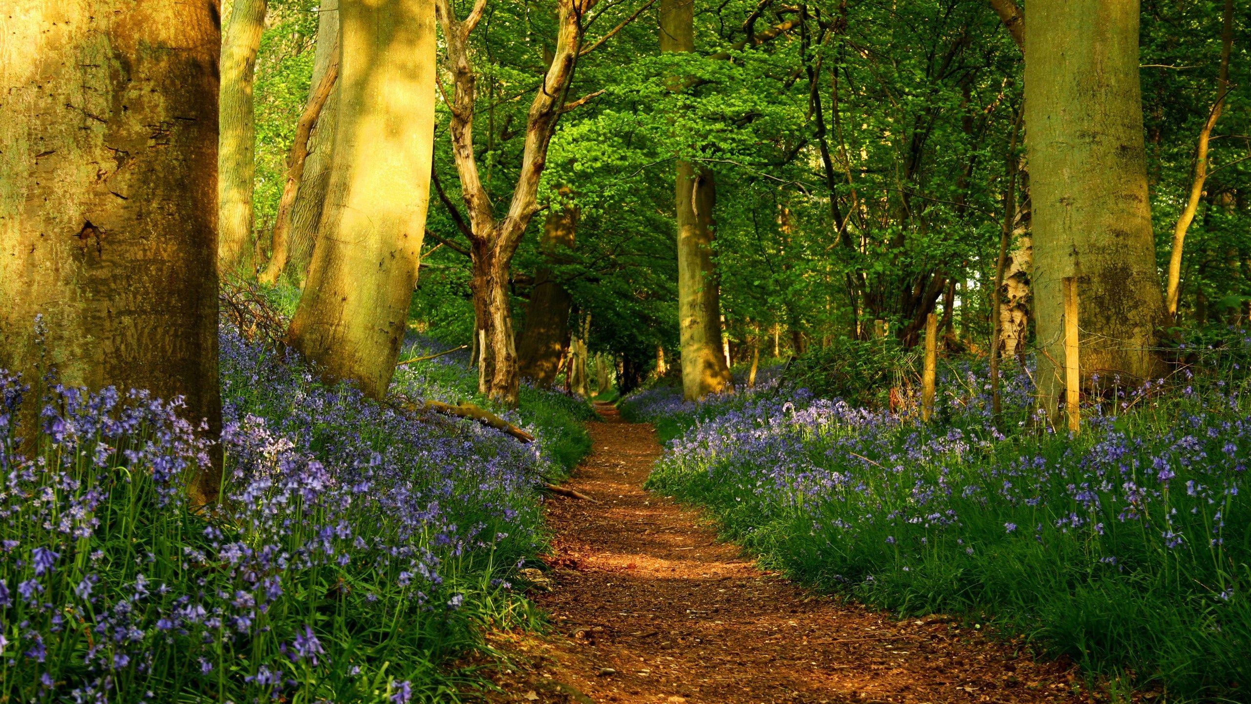 природа деревья лес тропа  № 1206288 загрузить