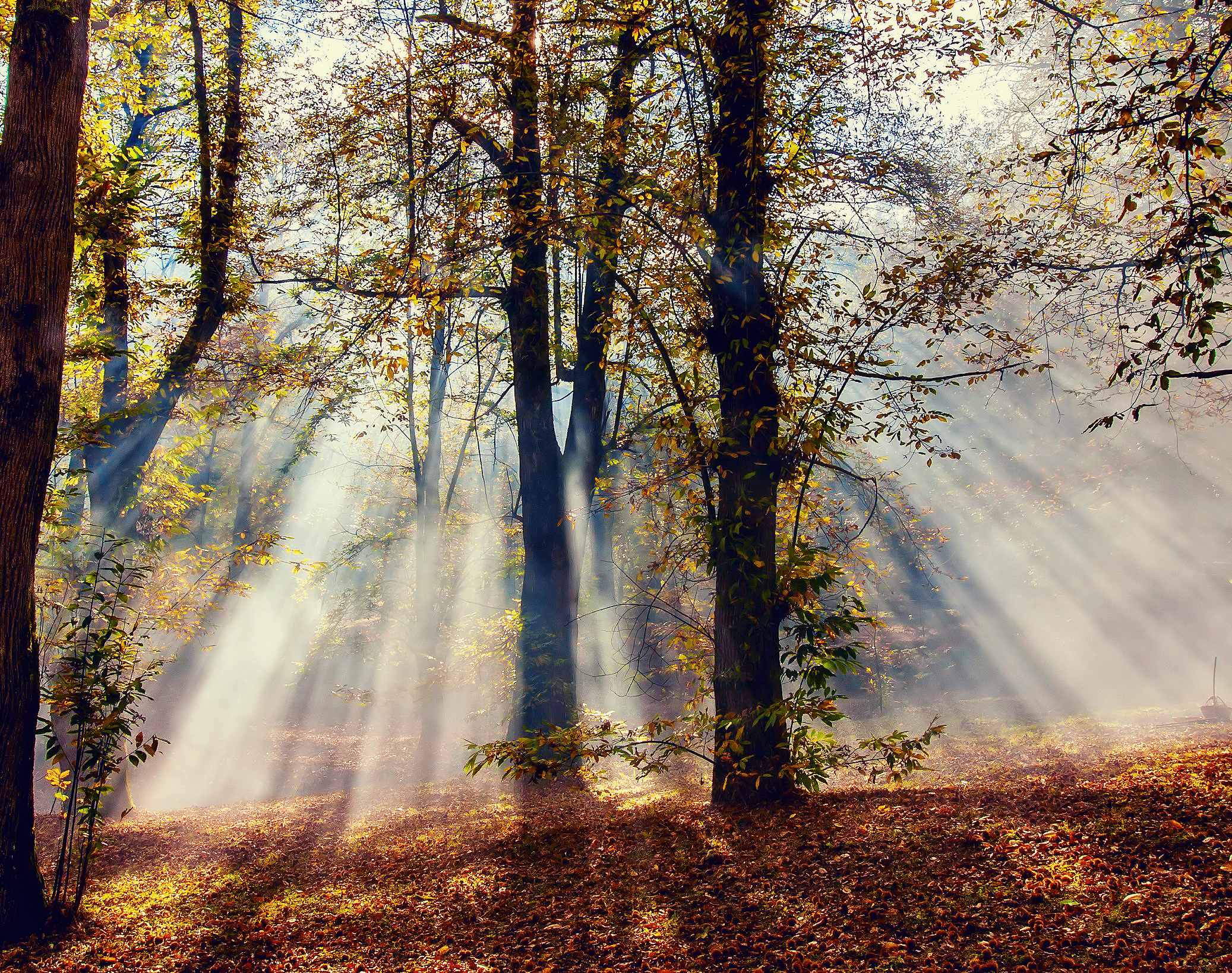 деревья листва осень солнце  № 3191707 загрузить