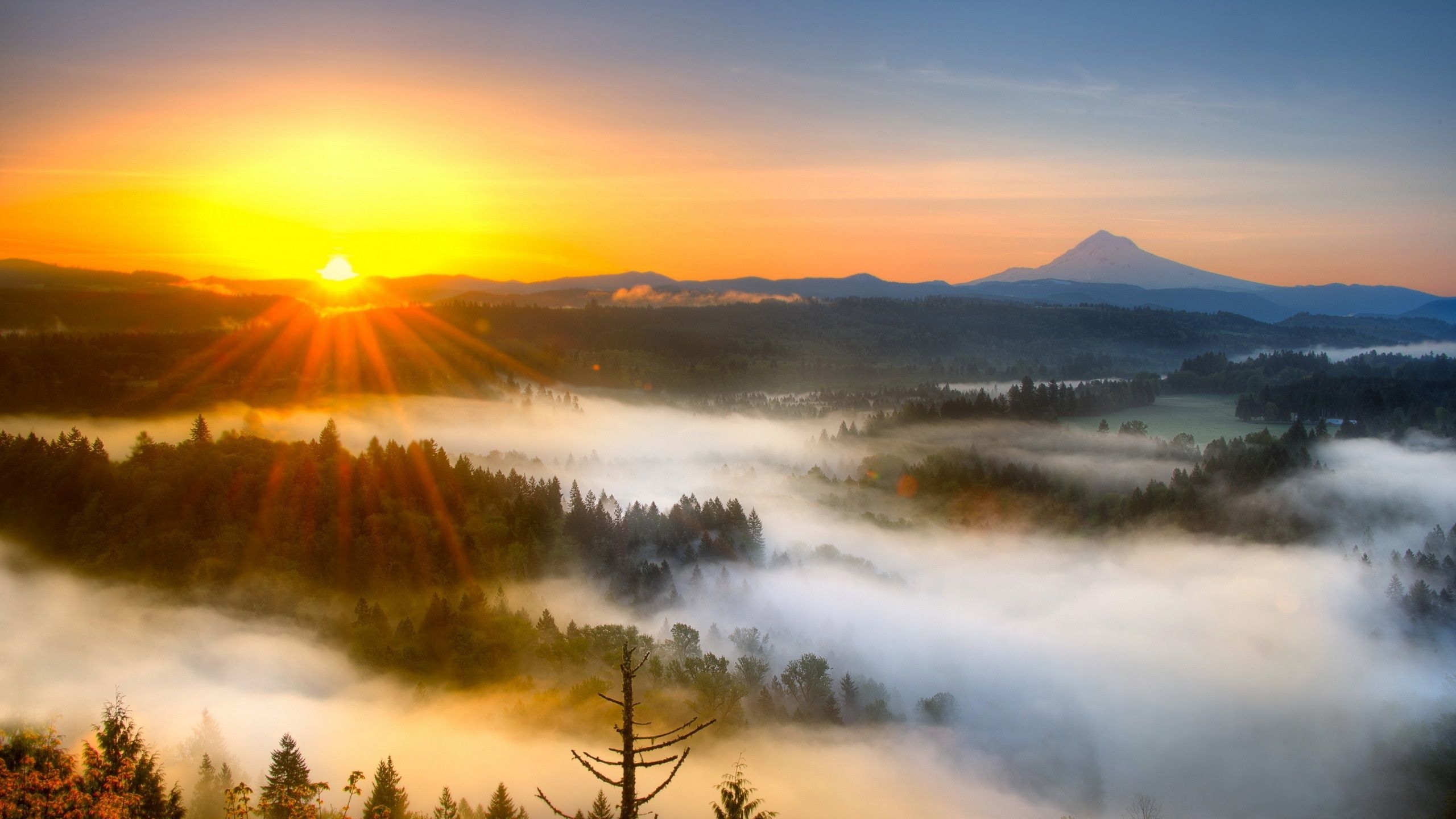 Закат в тумане в лесу  № 1140086  скачать