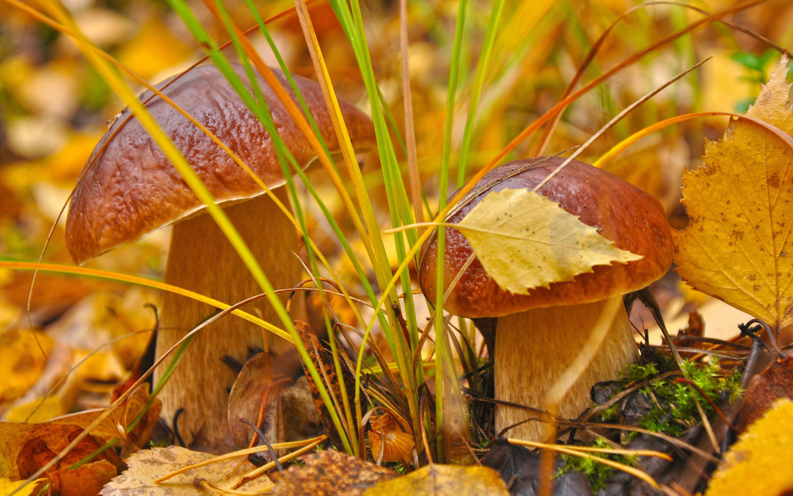 грибы природа осень листья загрузить