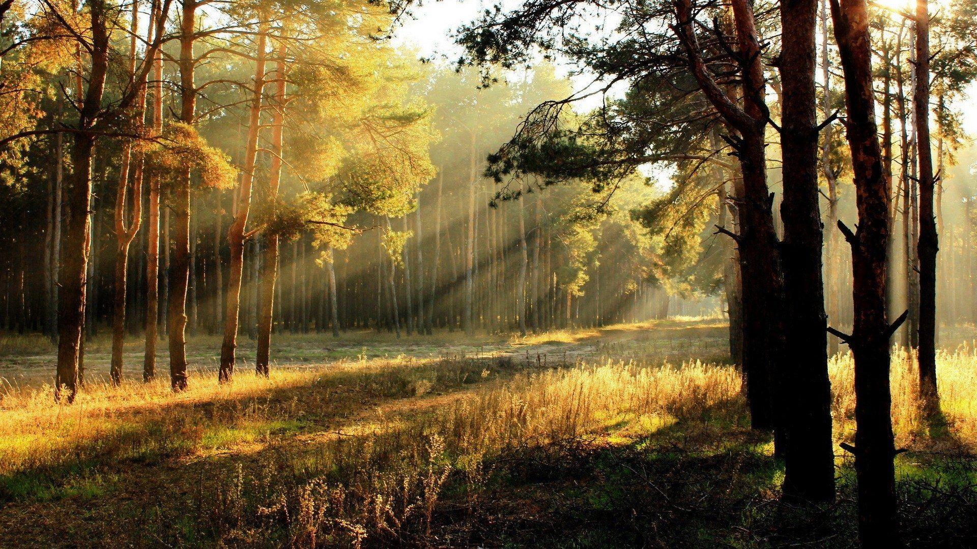Для открыток, картинки восход солнца в лесу
