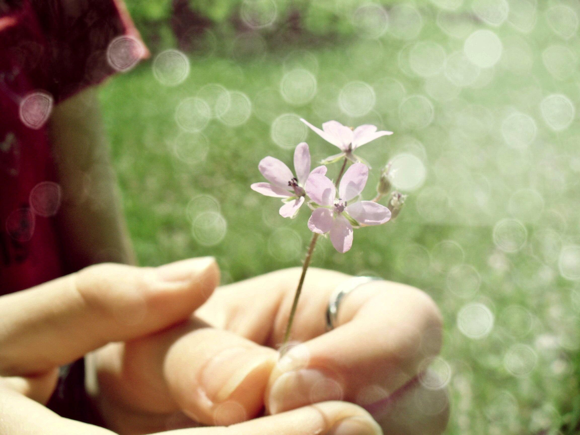 Рука, цветок загрузить