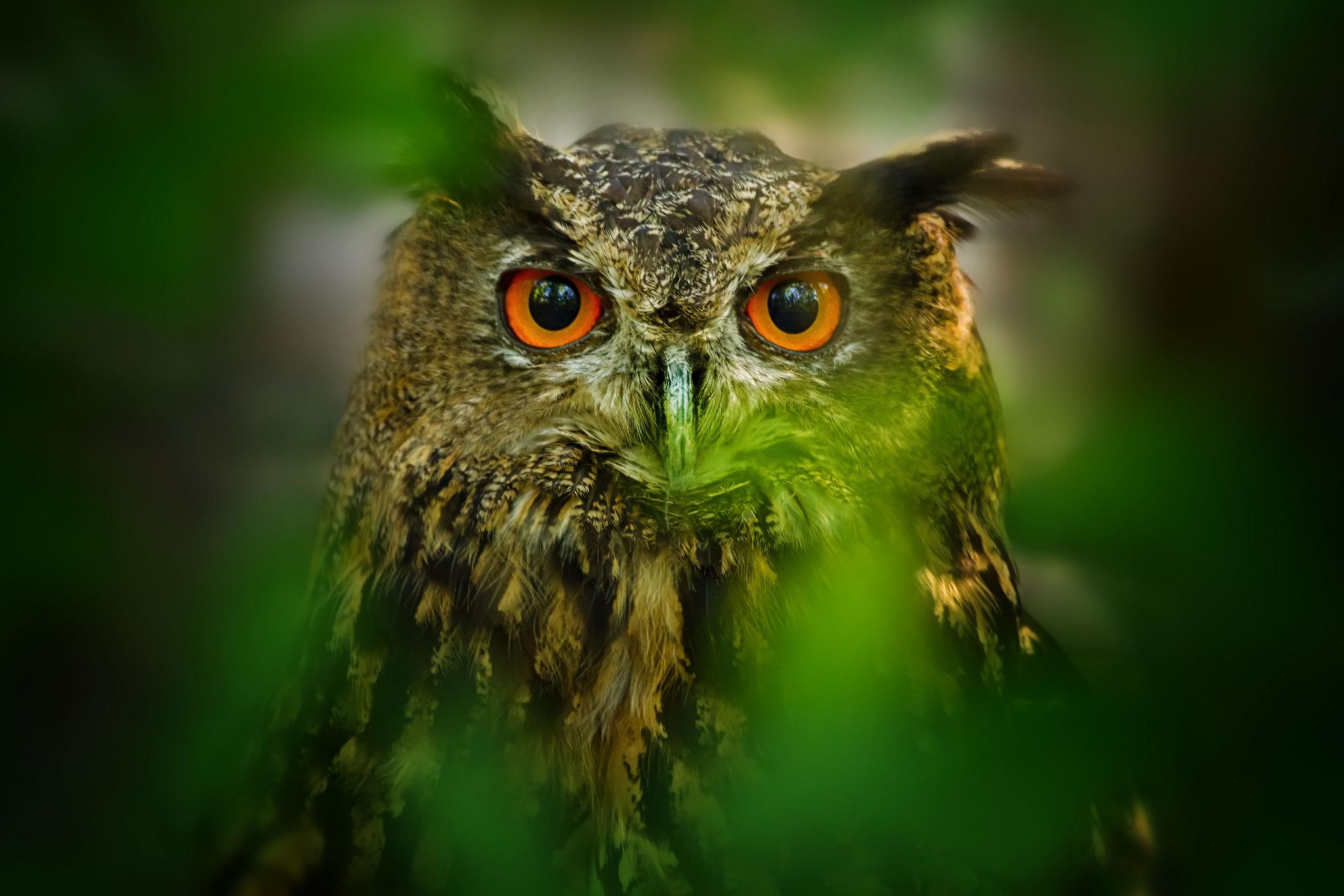 пестрая сова с желтыми глазами загрузить