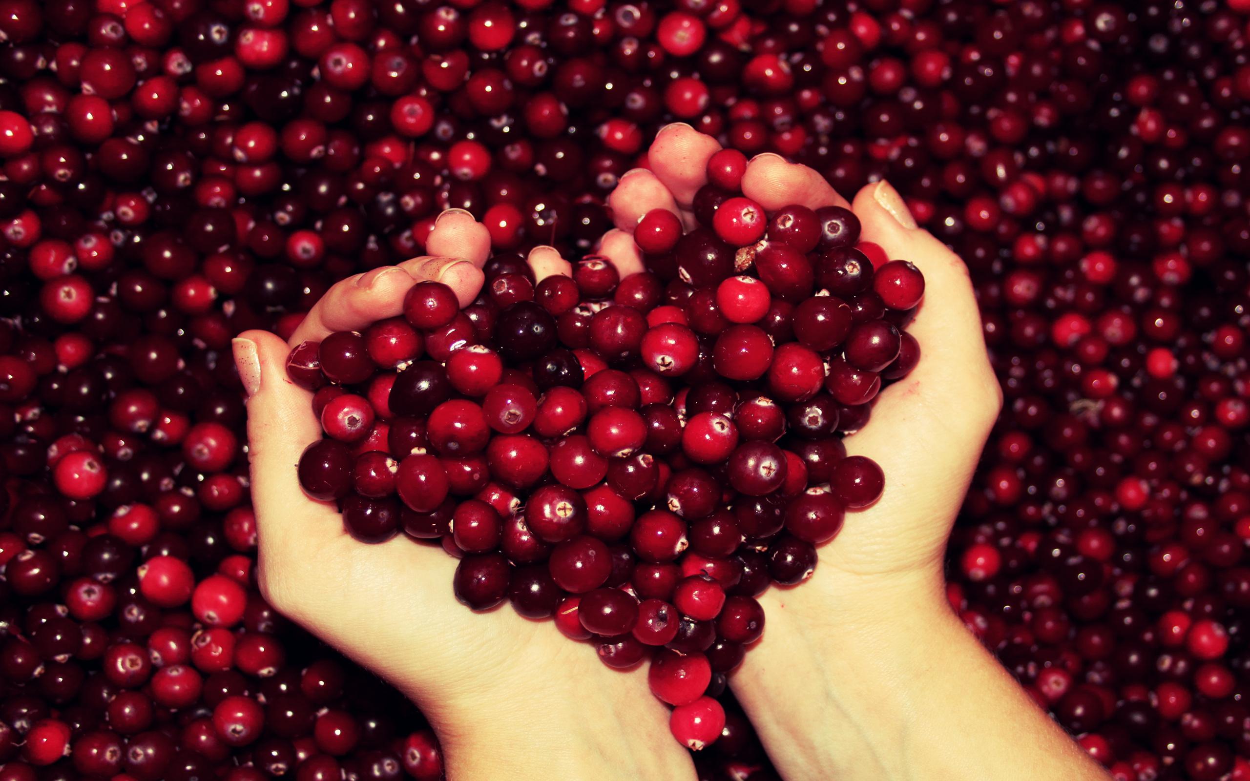 брусника ягода ведро загрузить