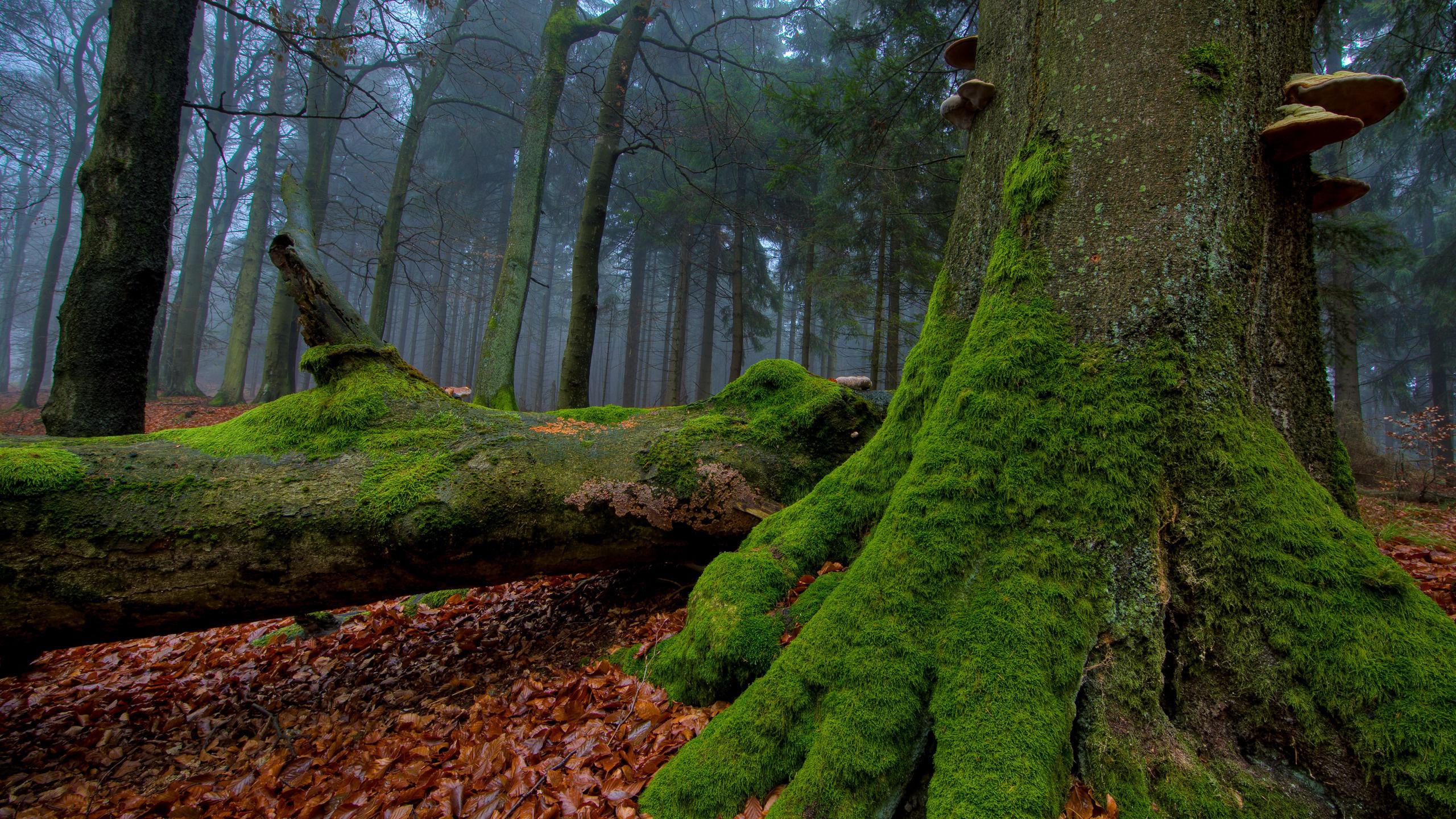 природа мох лестница трава деревья загрузить