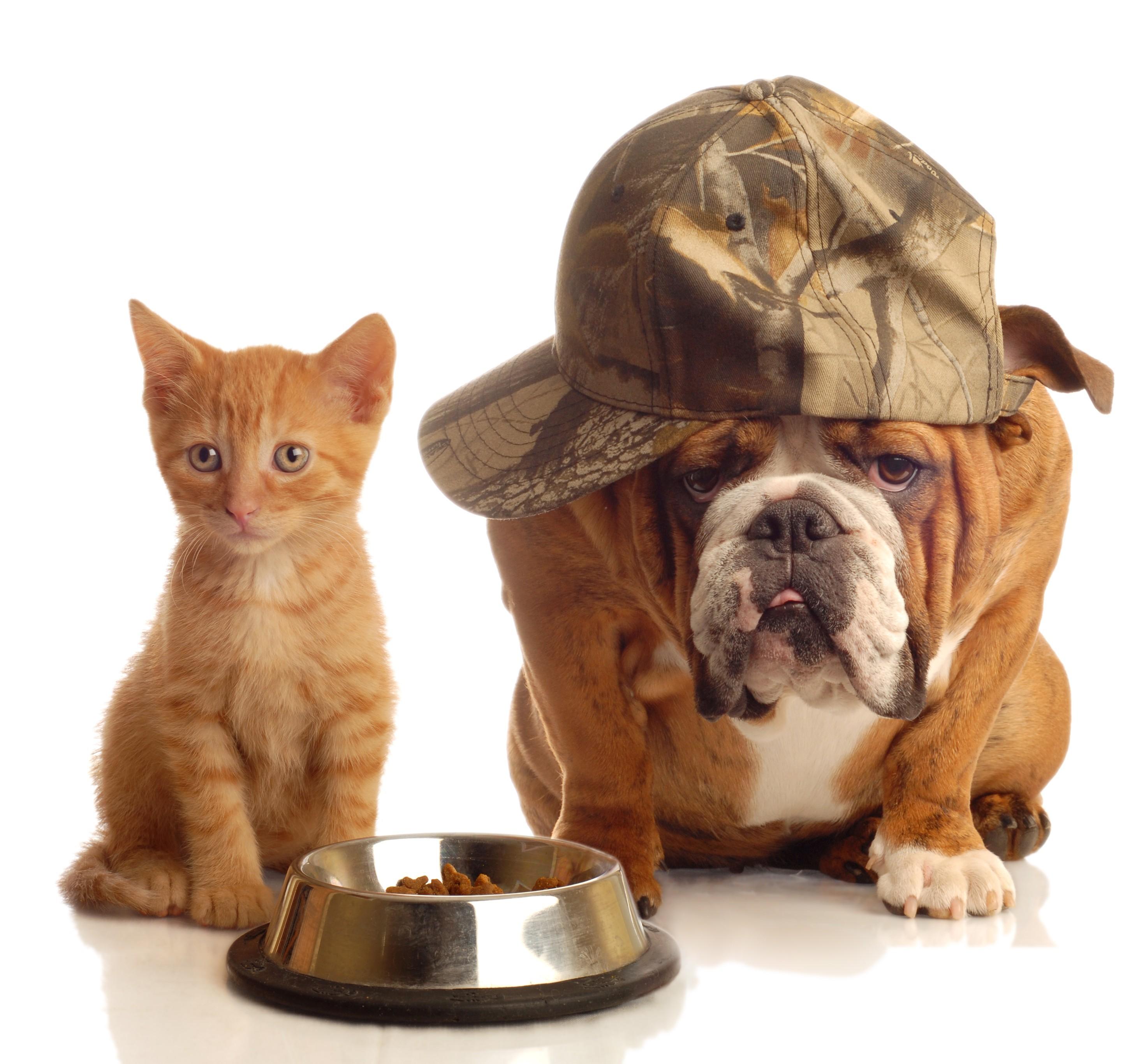animal farm kgb vs dogs
