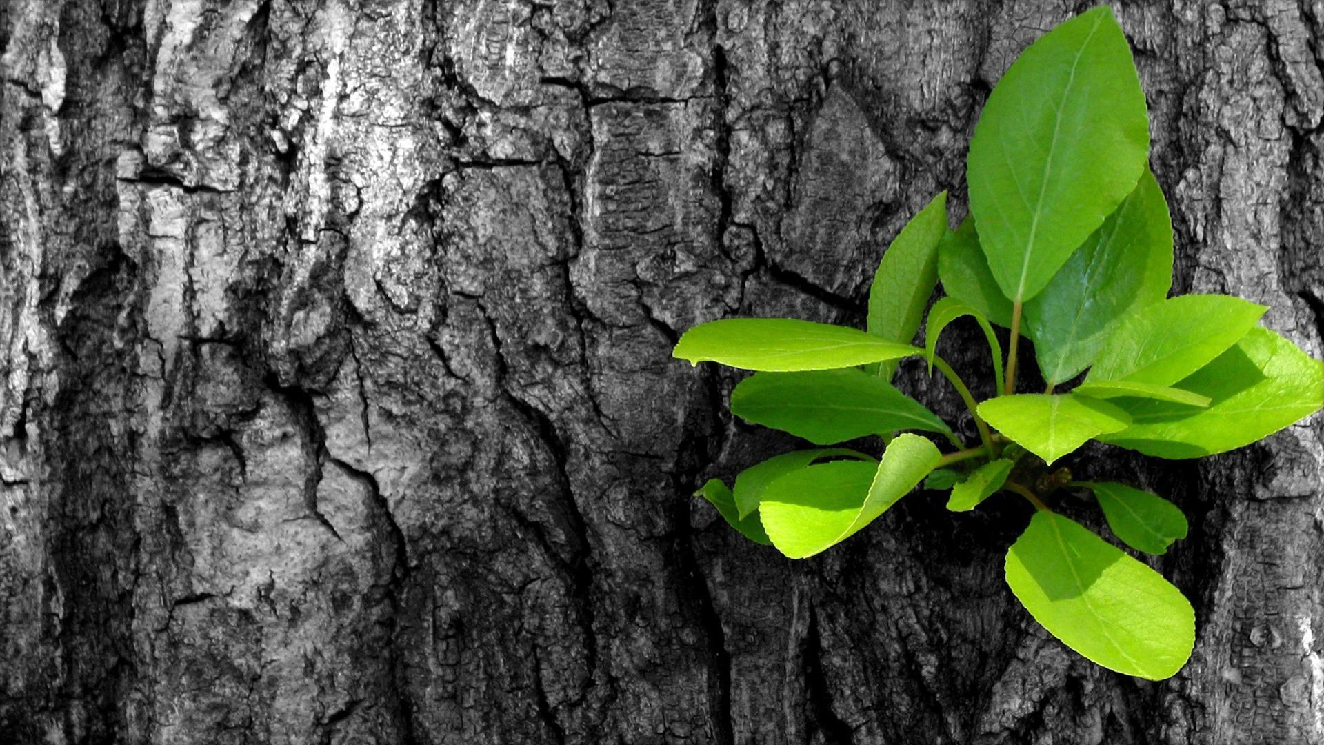 листья деревья без смс