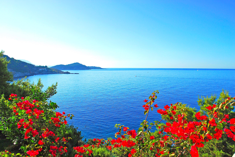 Открытки, картинка с морем цветов