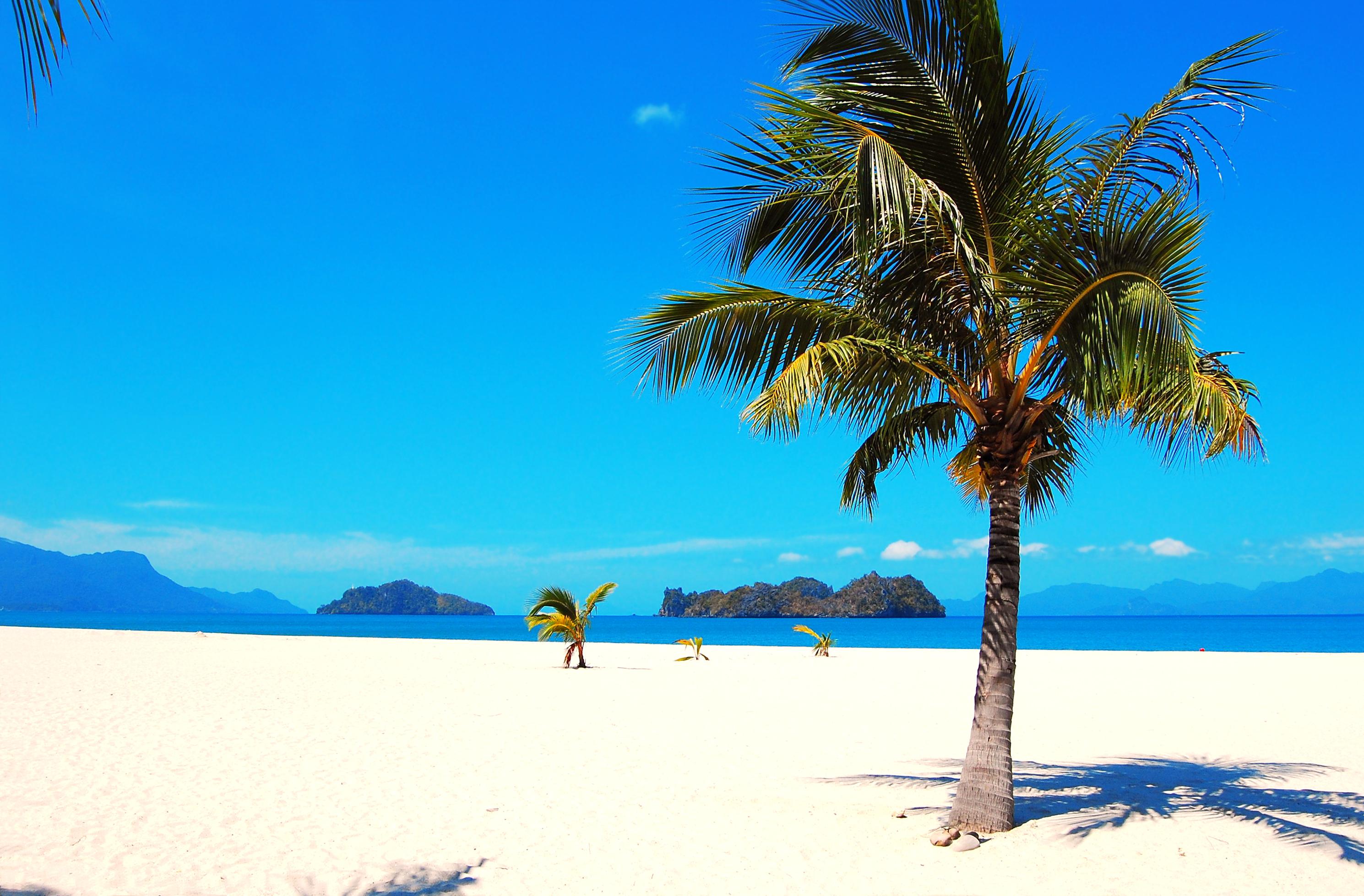 обои на рабочий стол море пальмы песок в высоком качестве № 2013 бесплатно