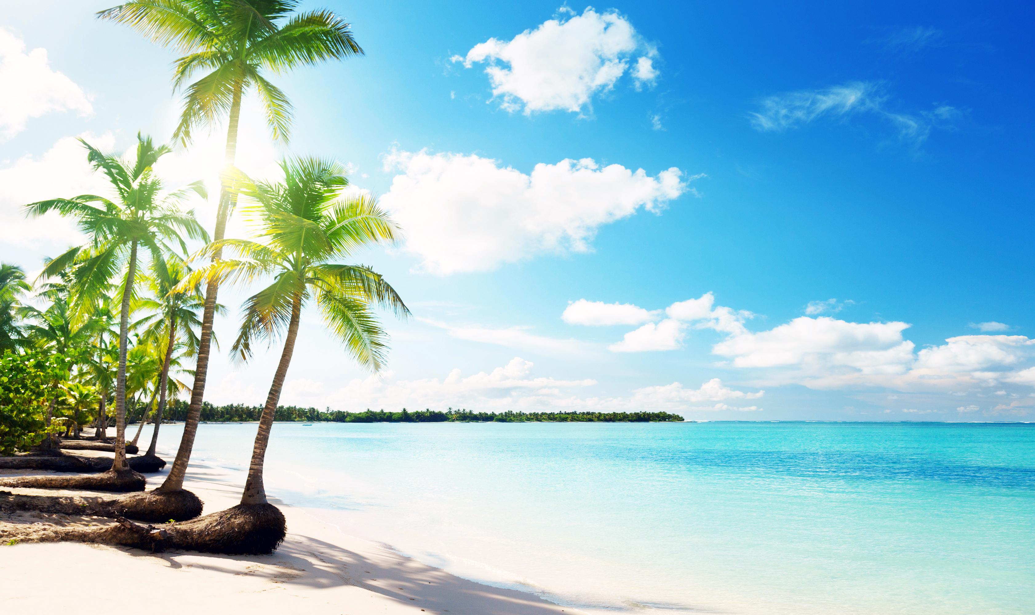 берег пальма море солнце пляж  № 3779862 бесплатно