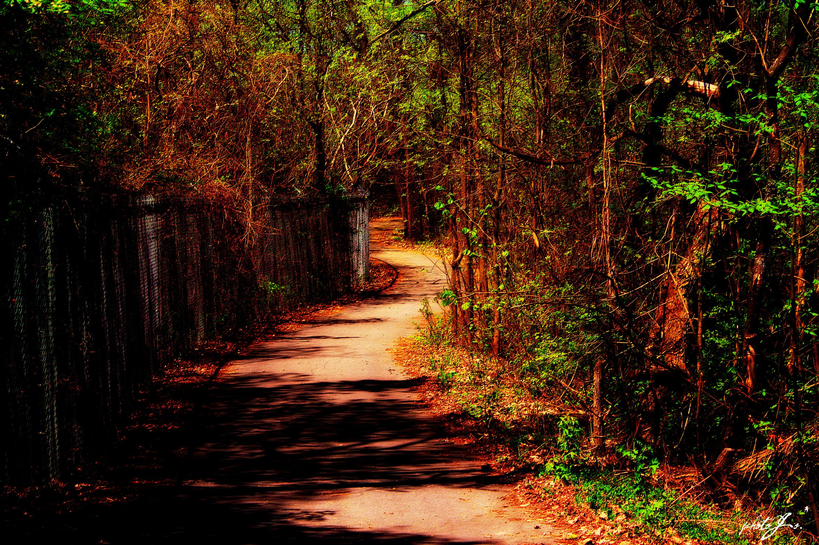 дорога забор кусты road the fence bushes без смс