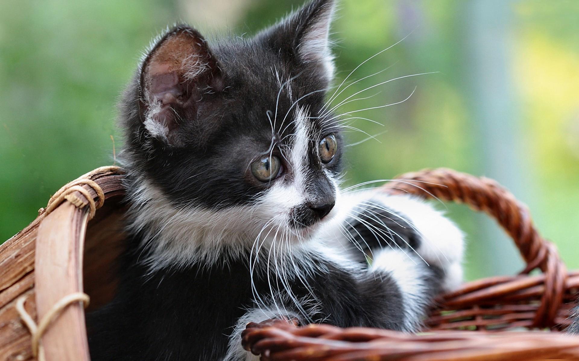 Черно белые картинки котят и кошек