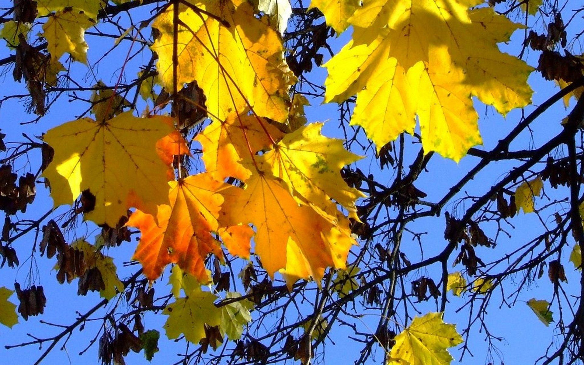 Открытка с листвой