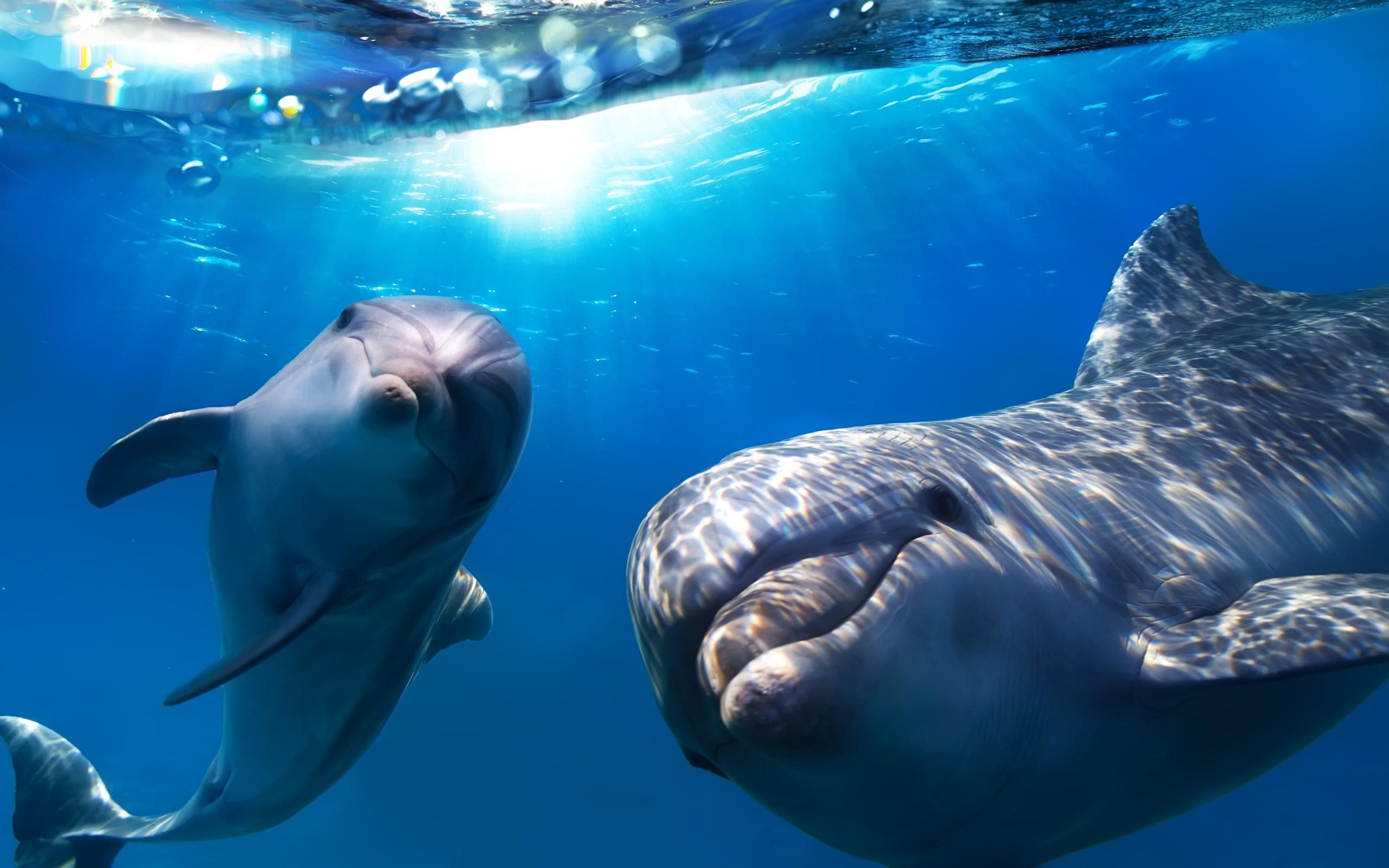 Скачать обои на рабочий стол дельфины скачать