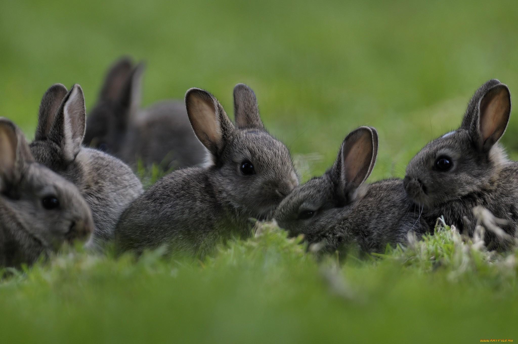 природа животные заяц nature animals hare  № 103336 бесплатно