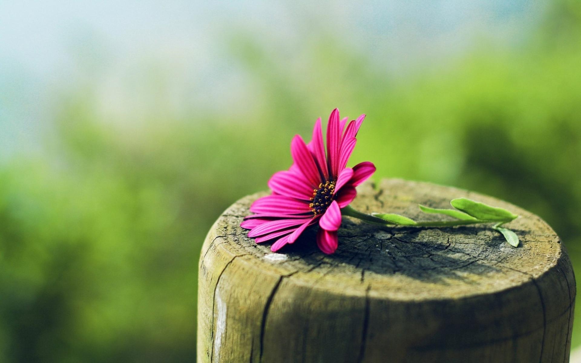 интересные цветы бесплатно