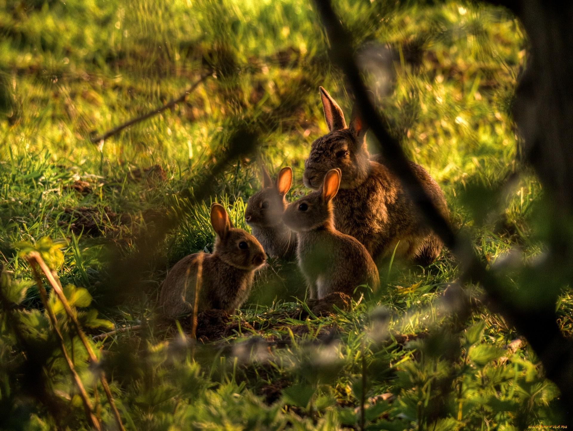 природа животные кролик листья осень деревья  № 2035250  скачать