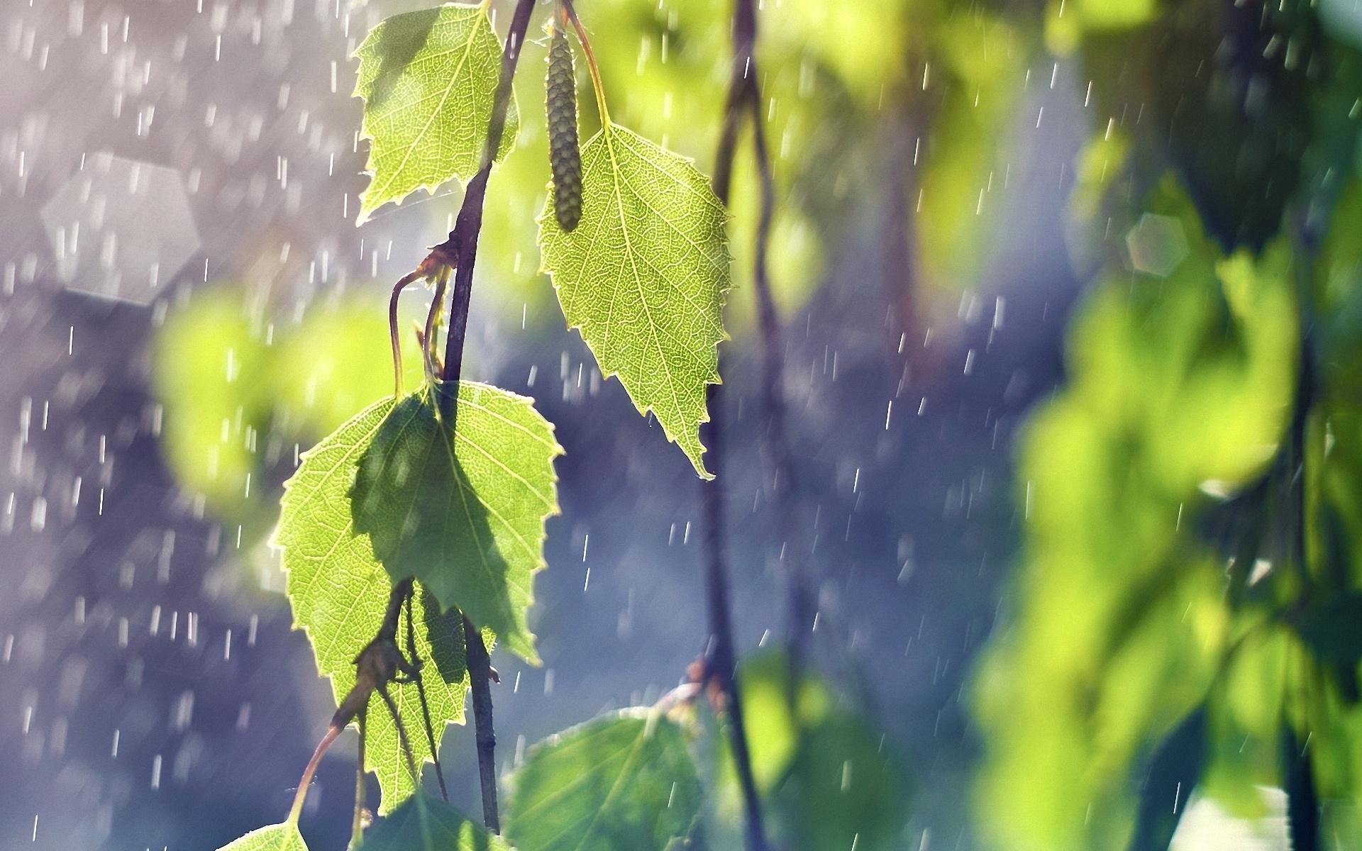 дождь, капля, лист, лето скачать