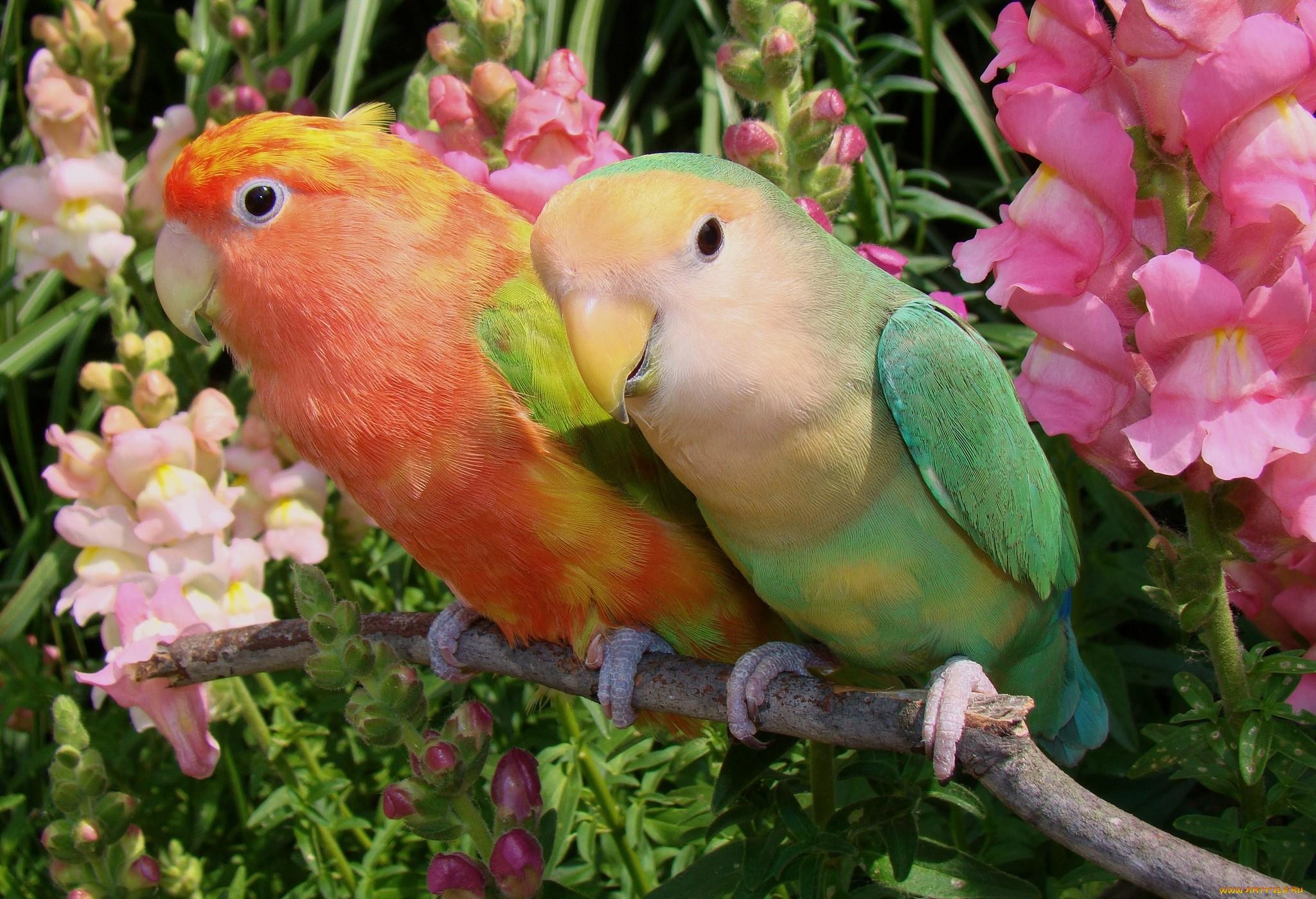 попугай макро деревья  № 737598 бесплатно