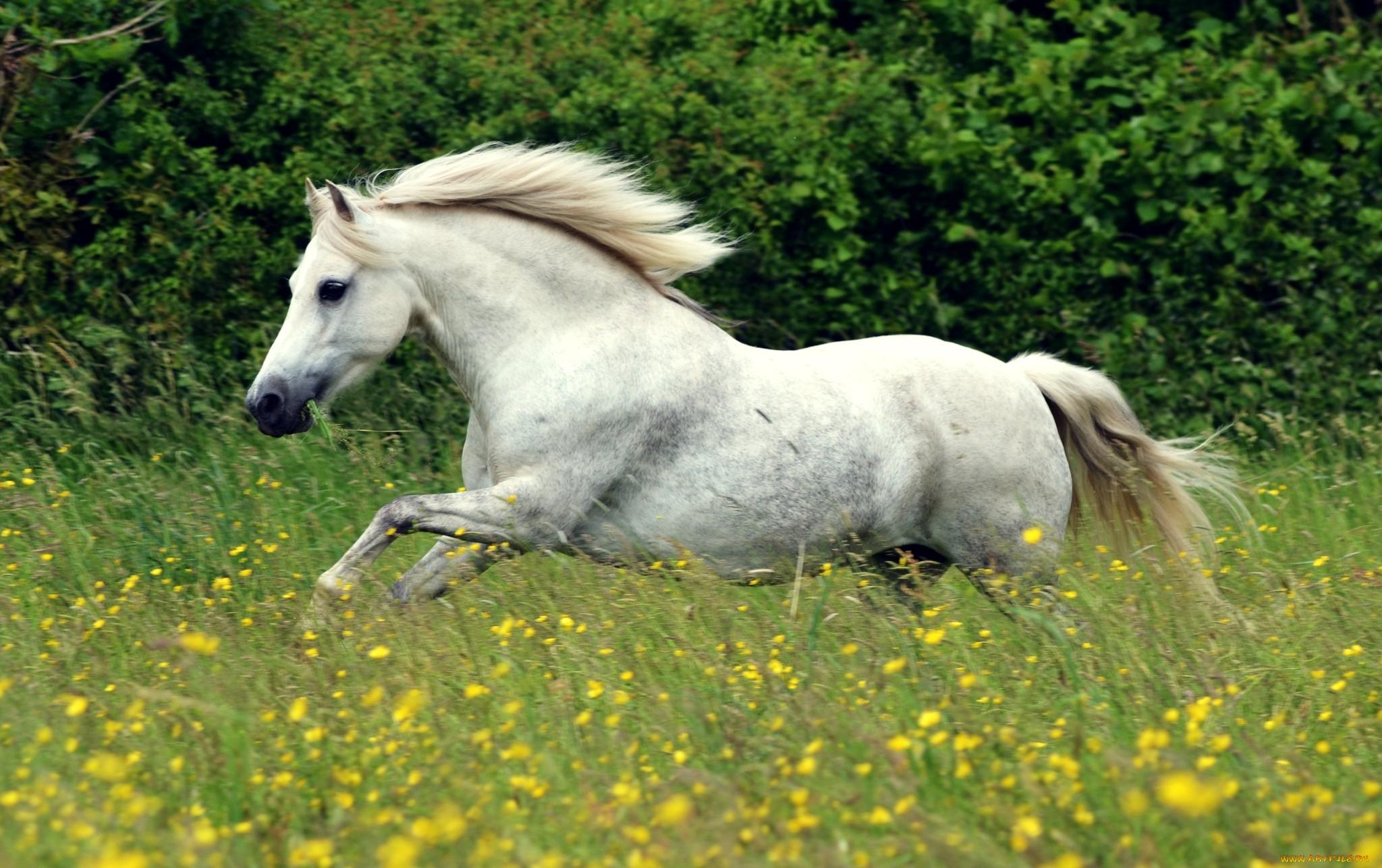 Фото белой лошади с цветком
