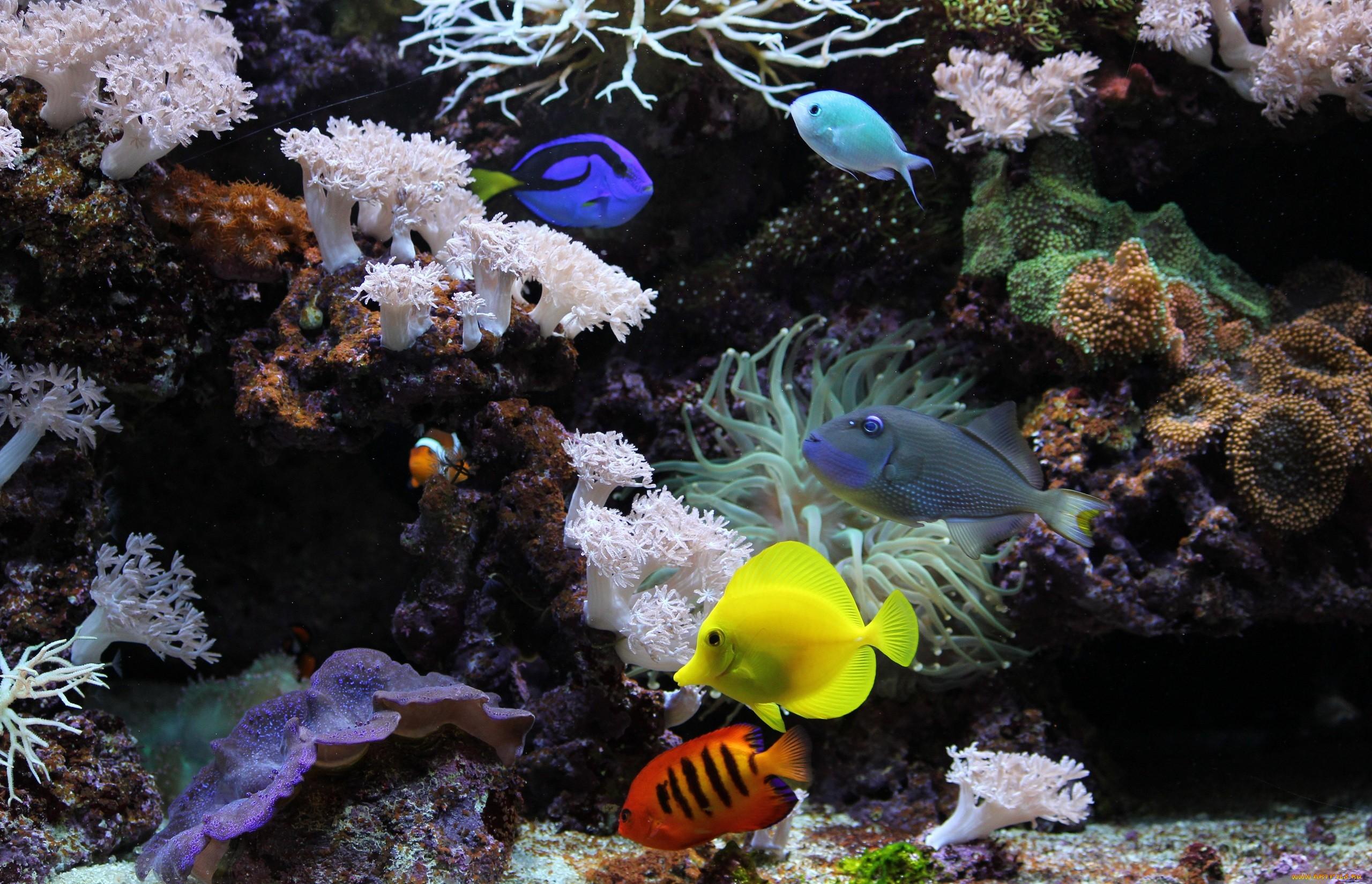 аквариум рыбы кораллы макро скачать