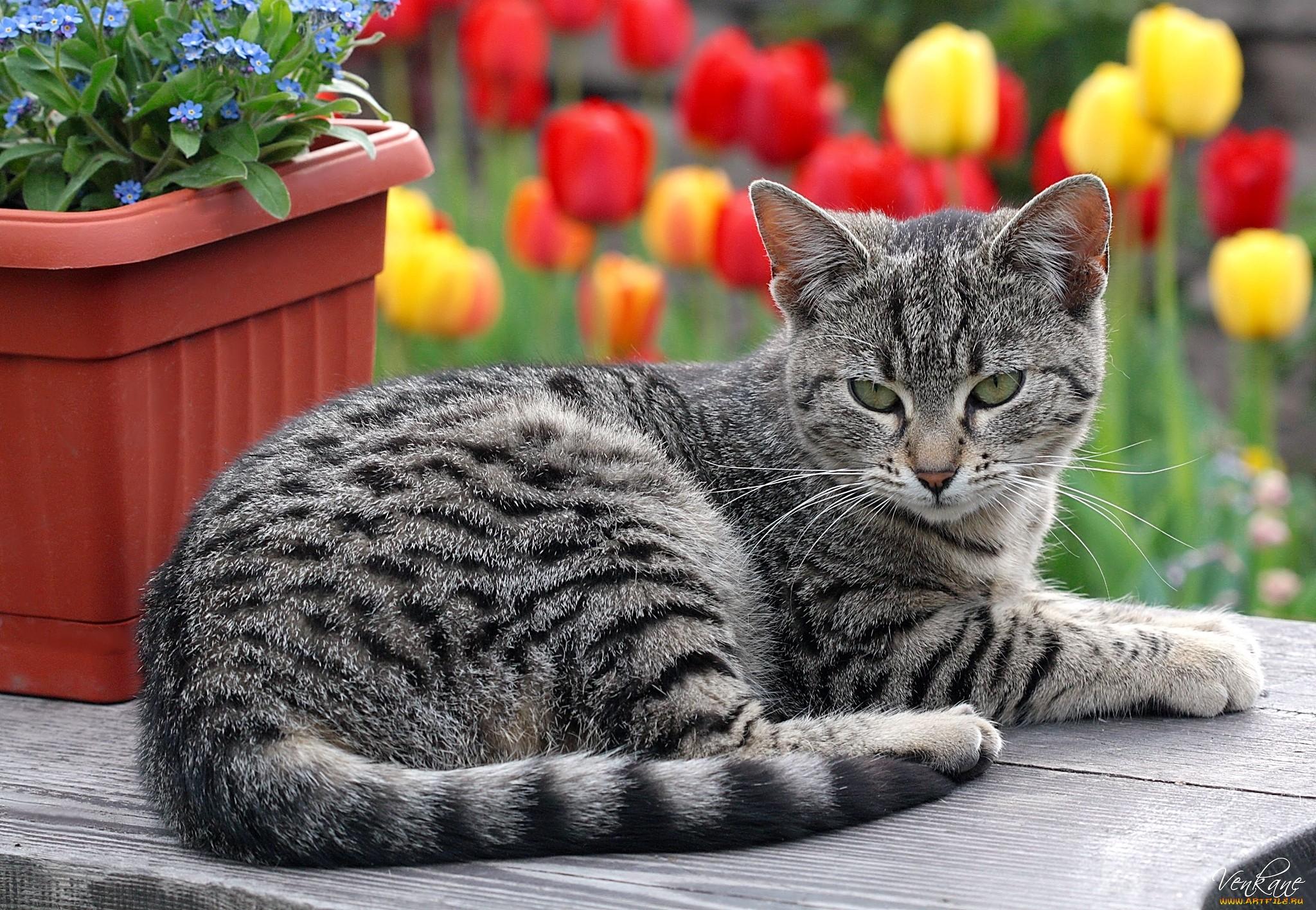 лежащие коты картинки хочется сытно пообедать