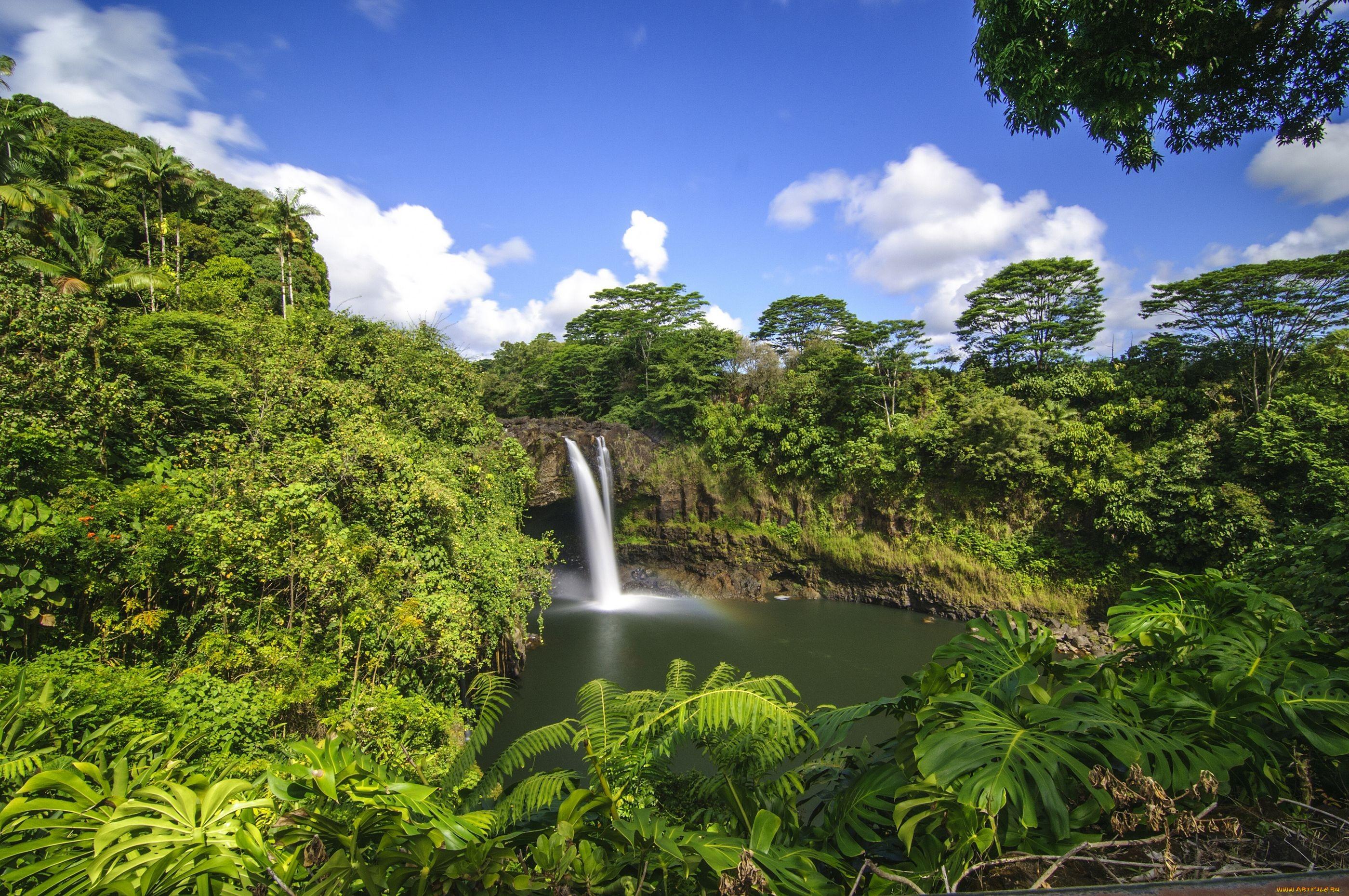 природа водопад деревья радуга  № 70458 без смс