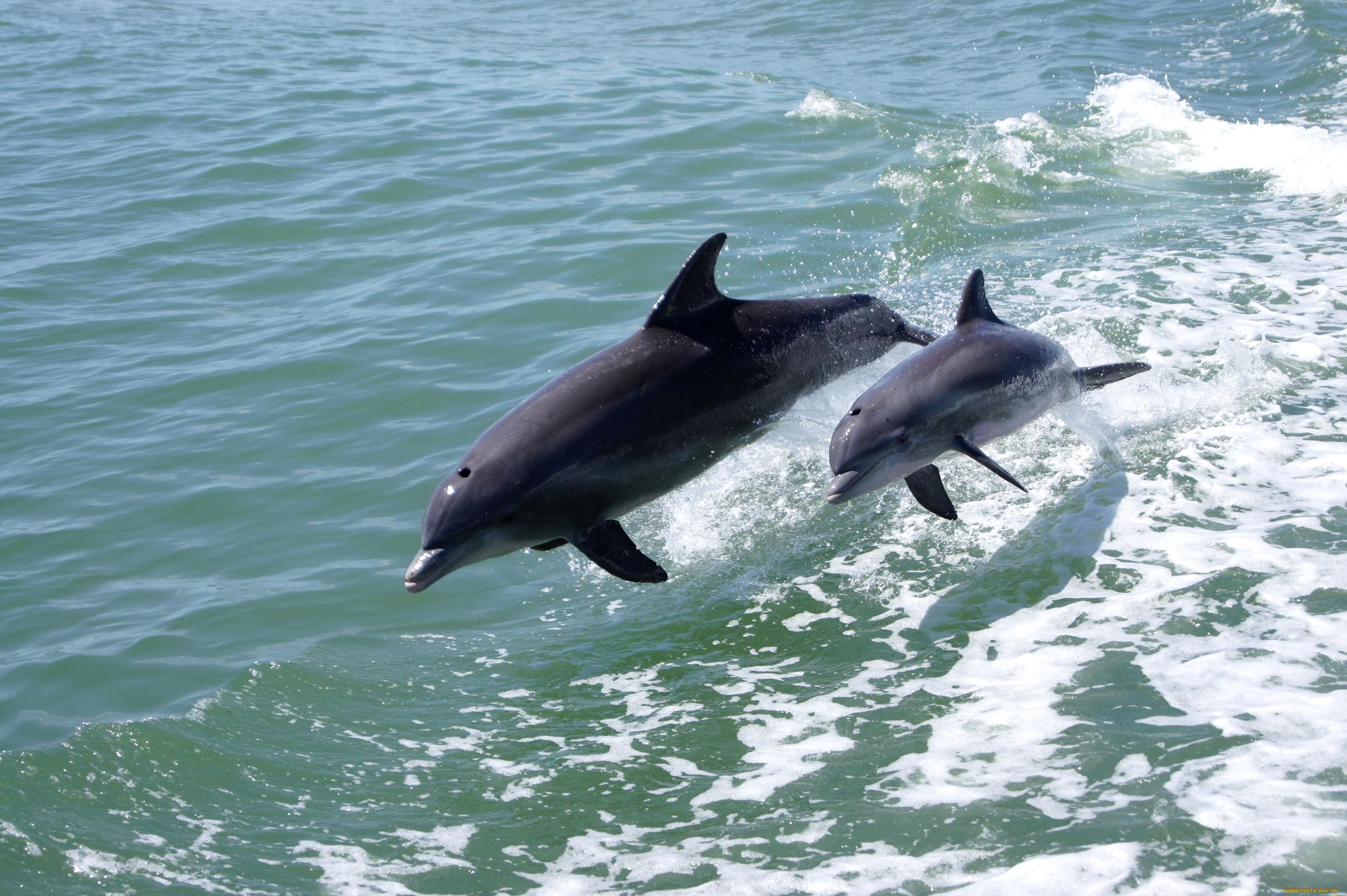 историю красивые картинки про море и дельфинов могут