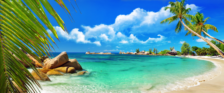 море, пляж, растительность скачать