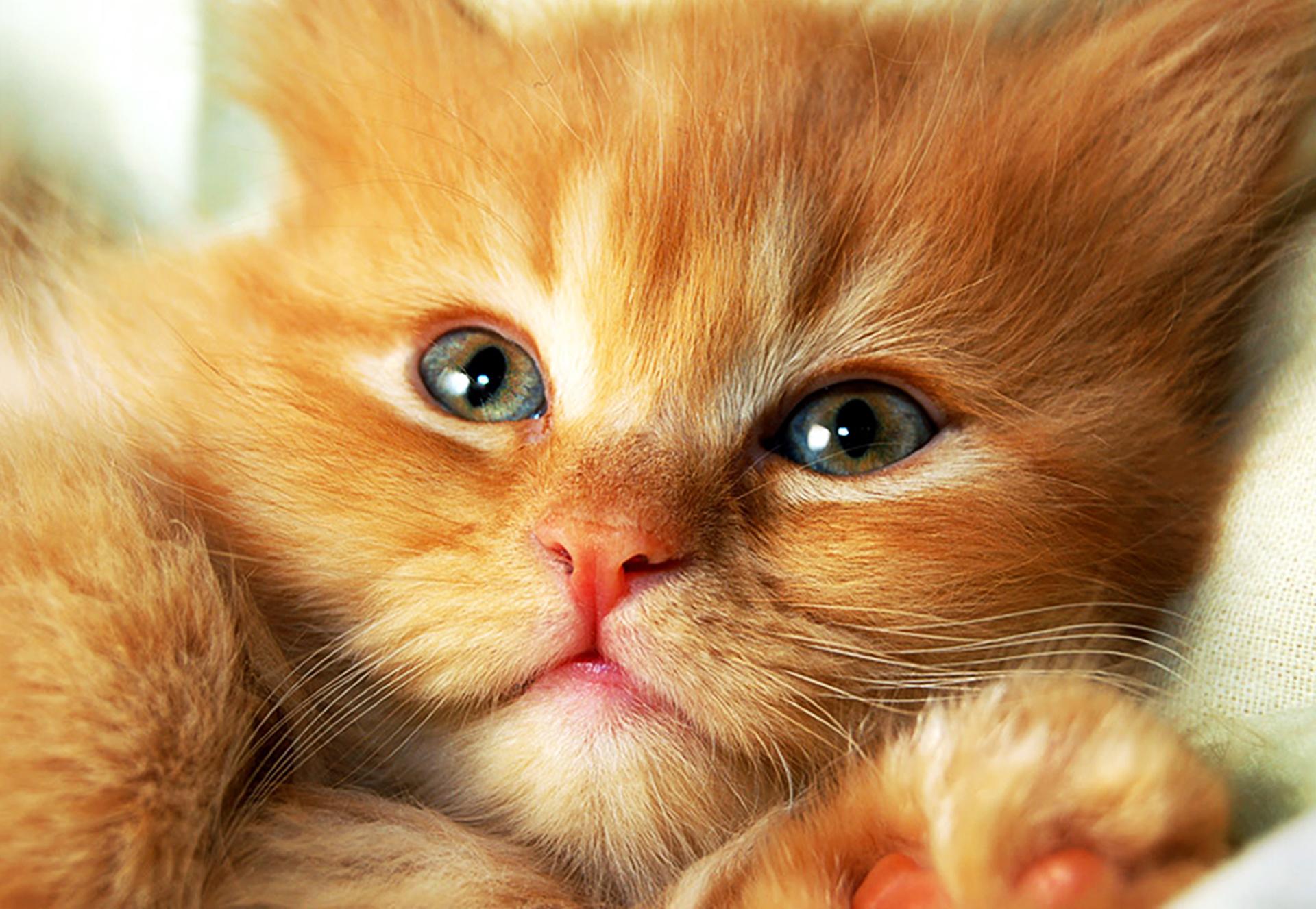 Красивые картинки котят с надписями, без