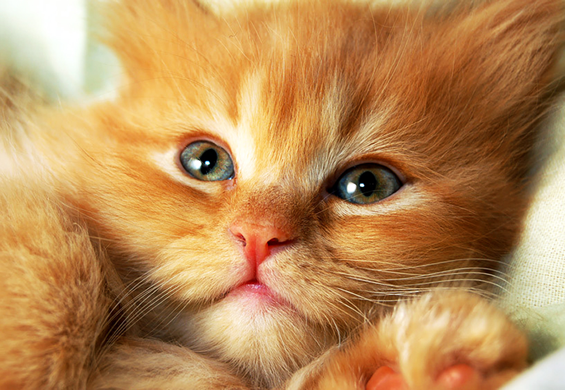 Веселые картинки с котятами с надписями