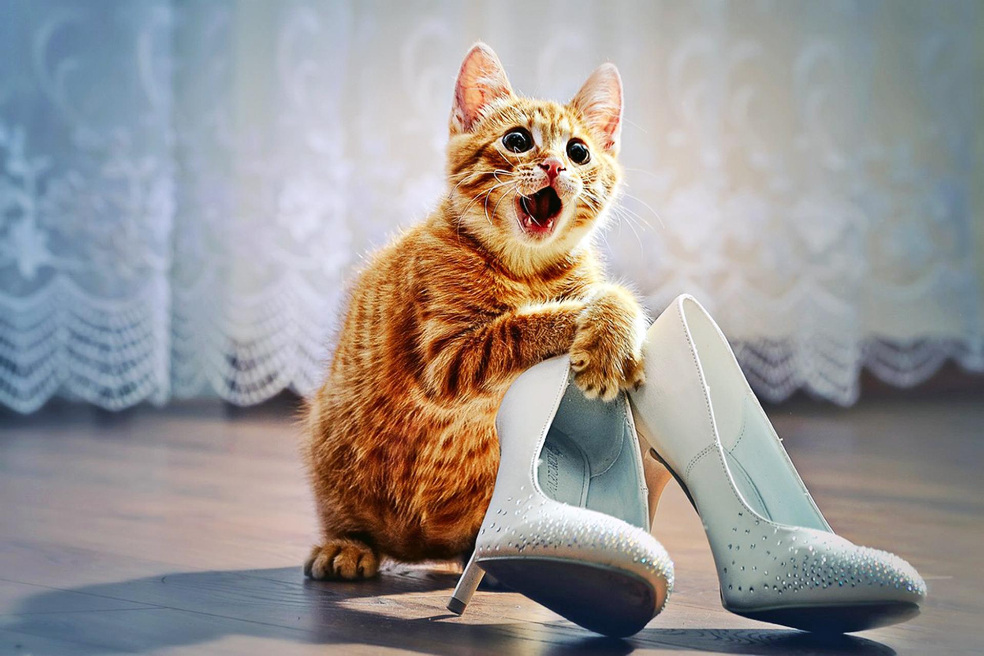 Открытки кошек юмор