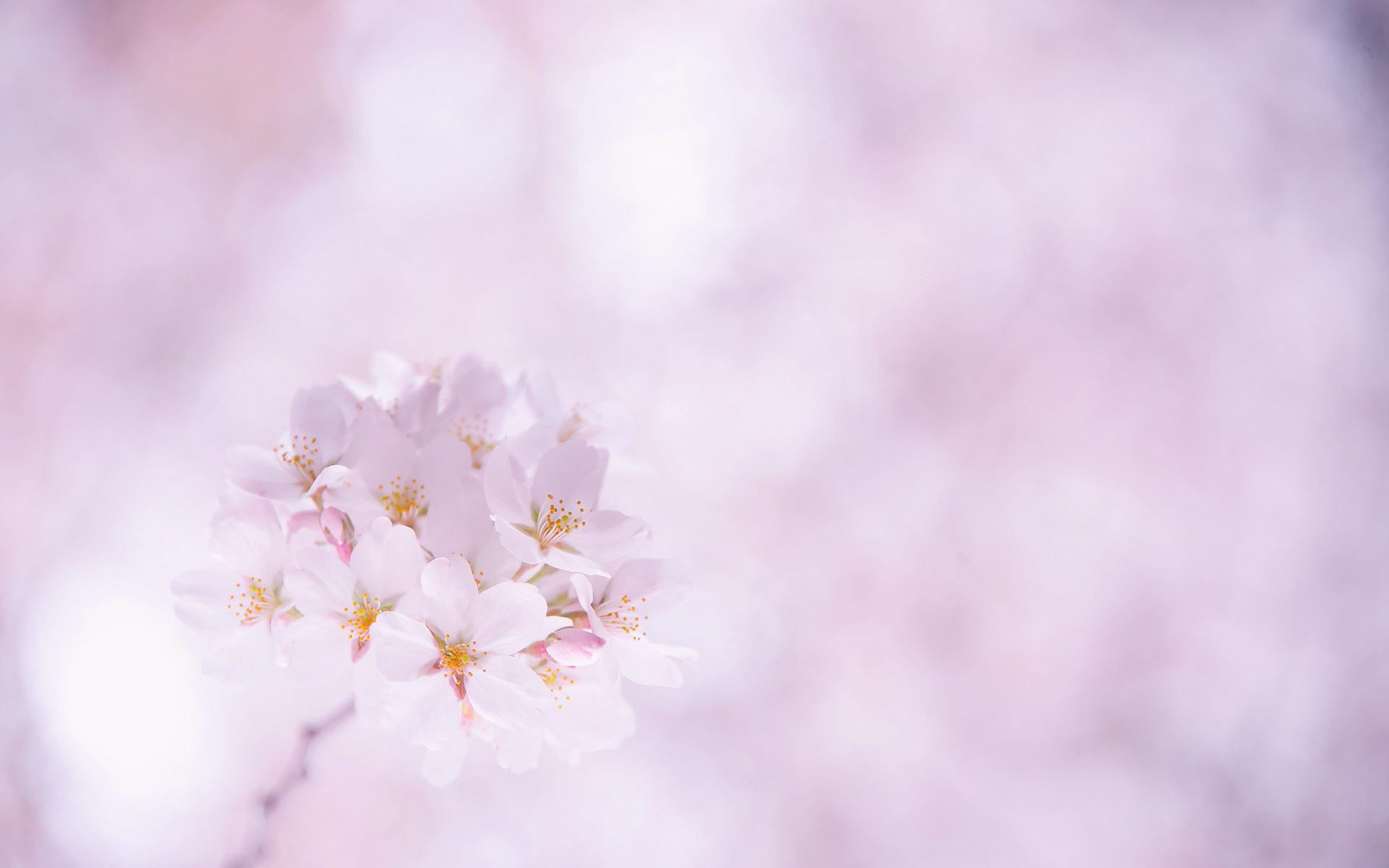 Опавшие лепестки цветения  № 3170430 загрузить