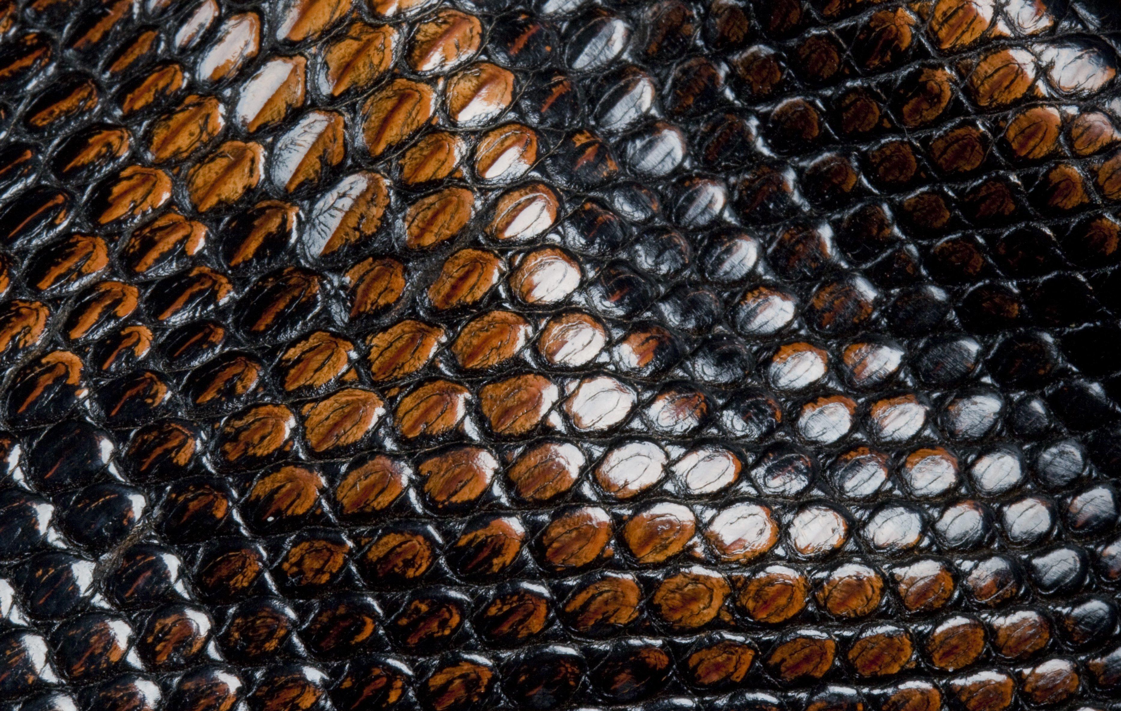 Кожа змеи обои на рабочий стол