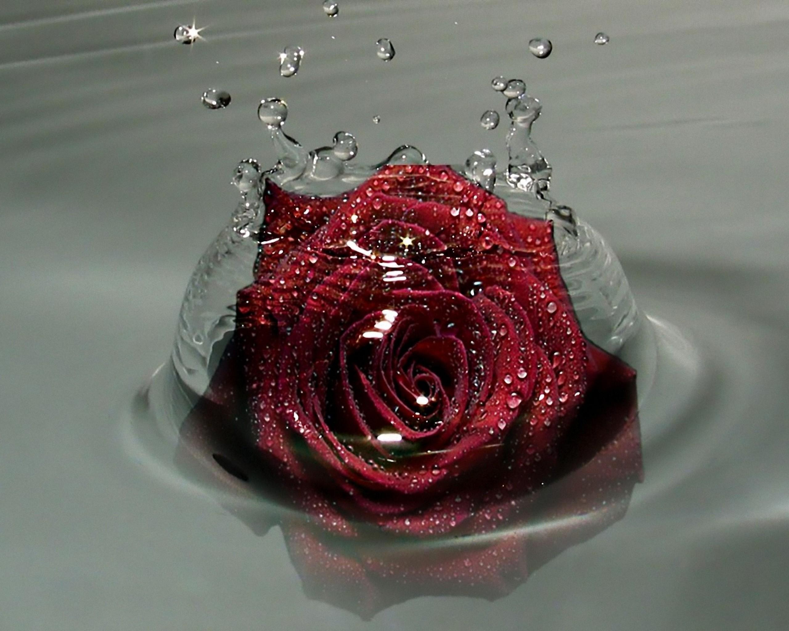 шеллак картинки красных роз на каплях воды можно узнать