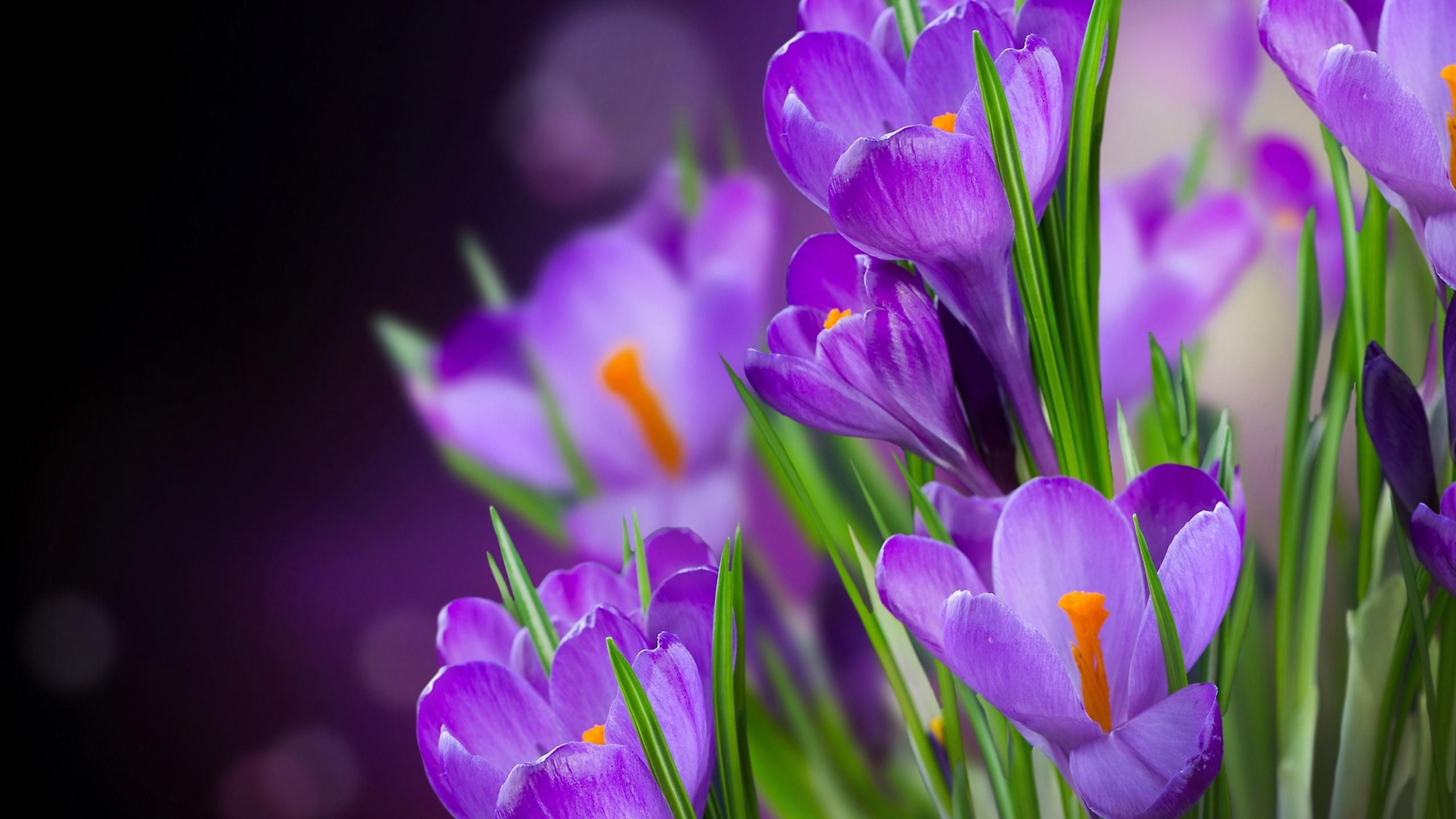 Открытки весенние цветы красивые