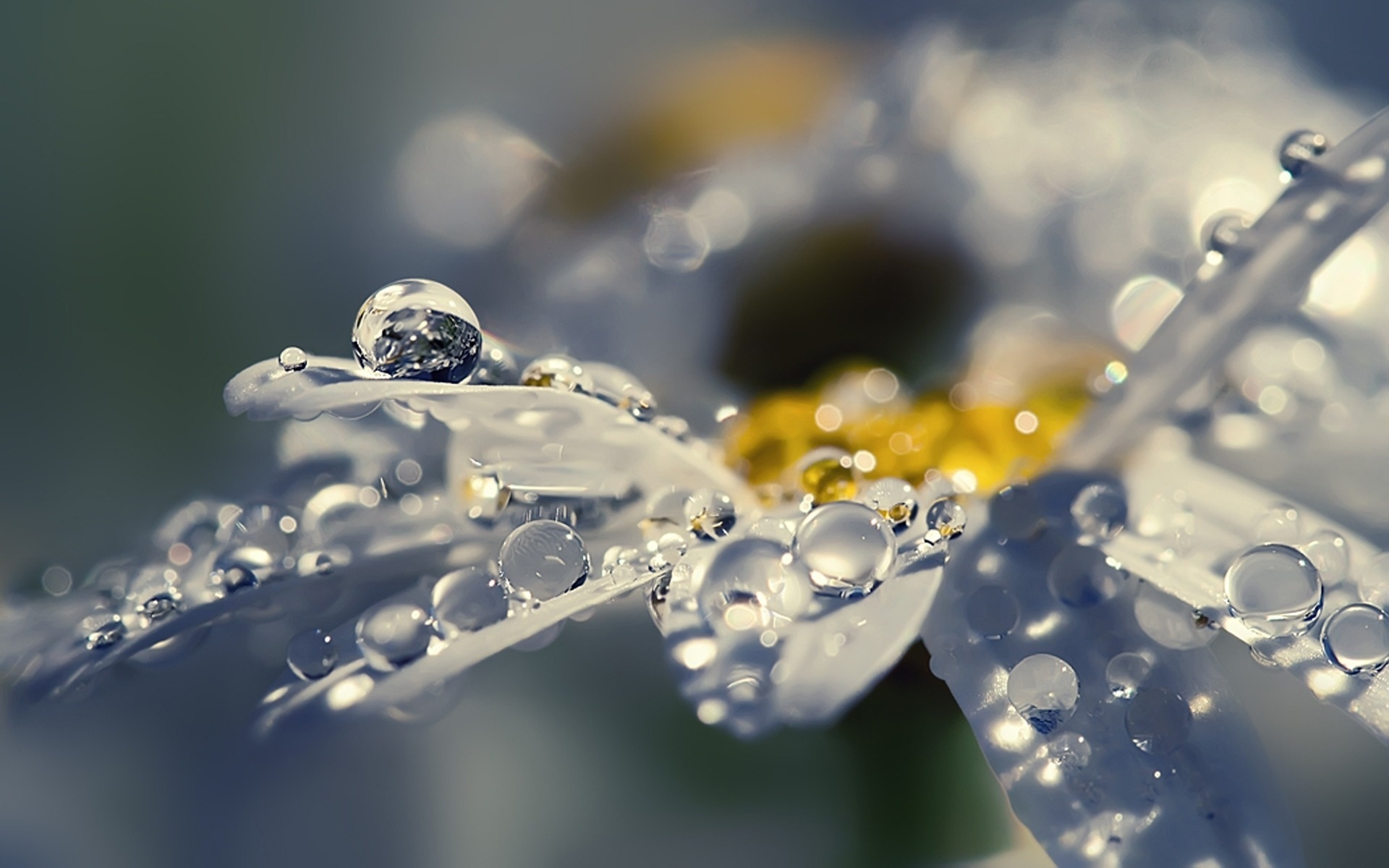 цветок лепестки капля макро загрузить