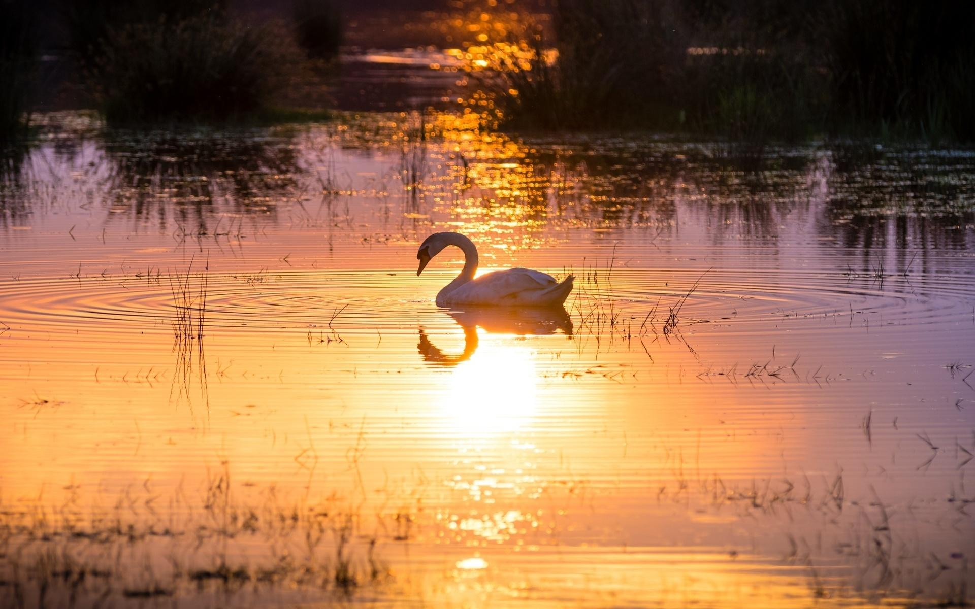 научиться сдерживаться как нарисовать отражение солнца утром в воде дом Нальчике