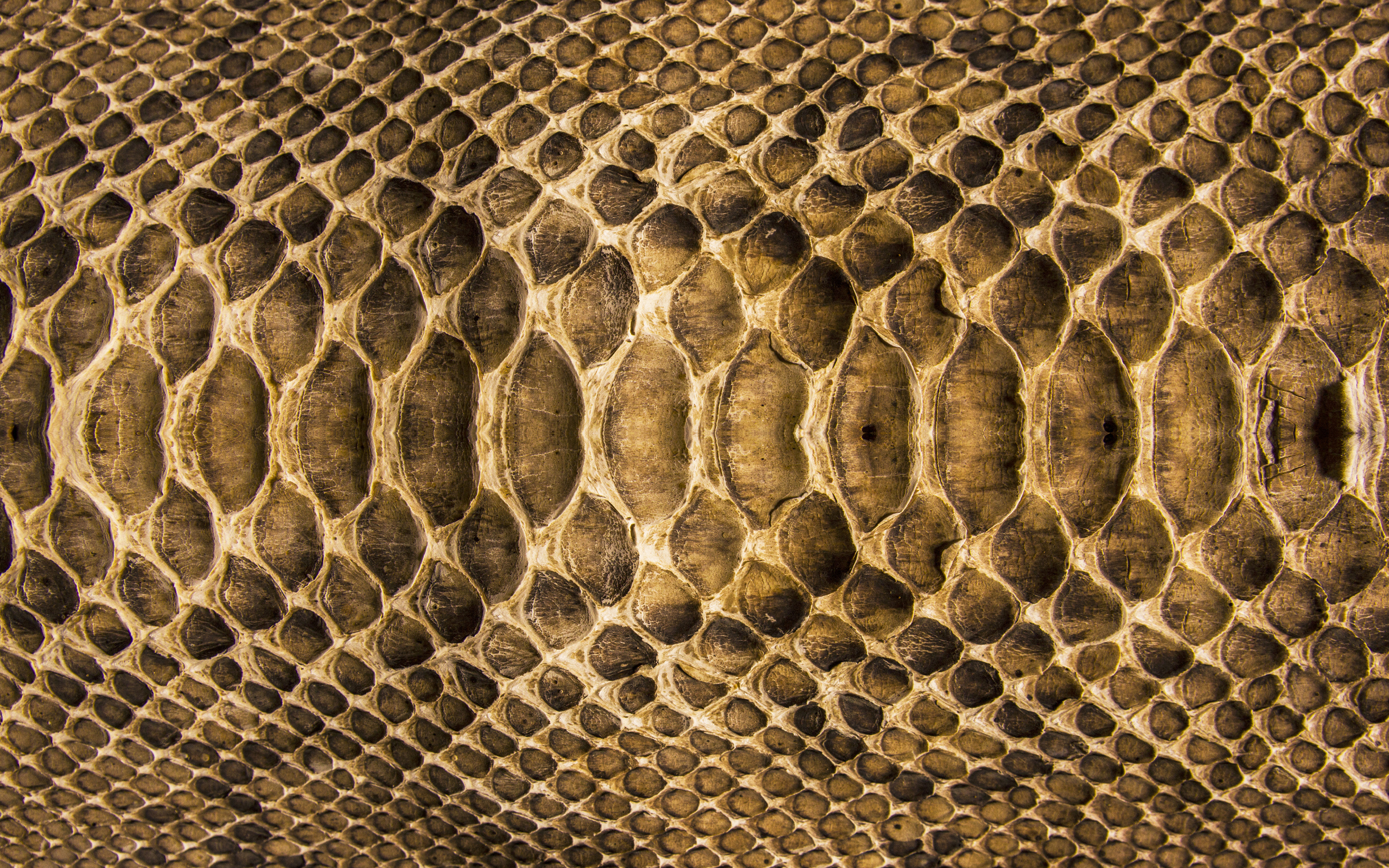 Текстура кожи змеи  № 3269858 без смс