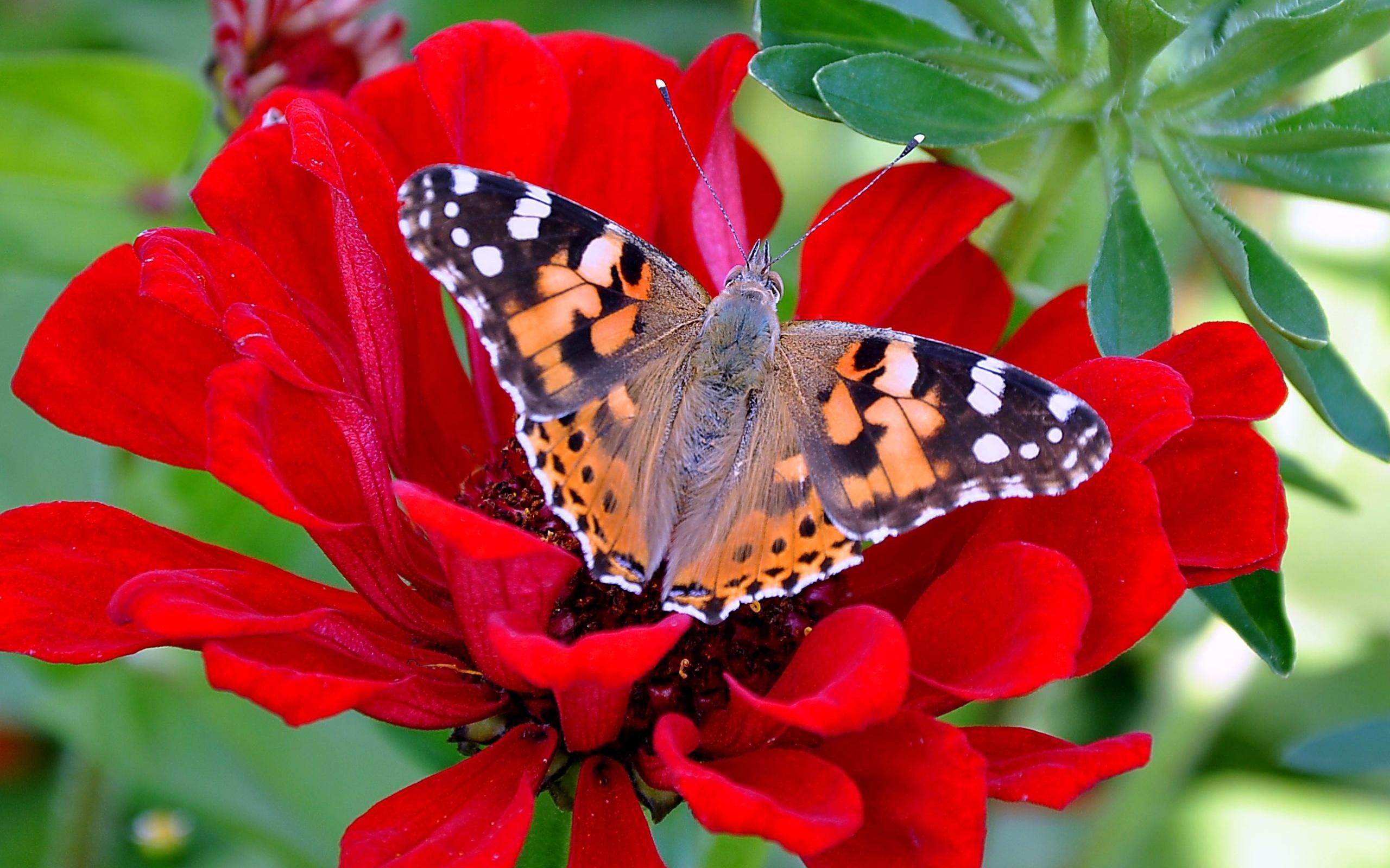 Бабочка на цветах найти