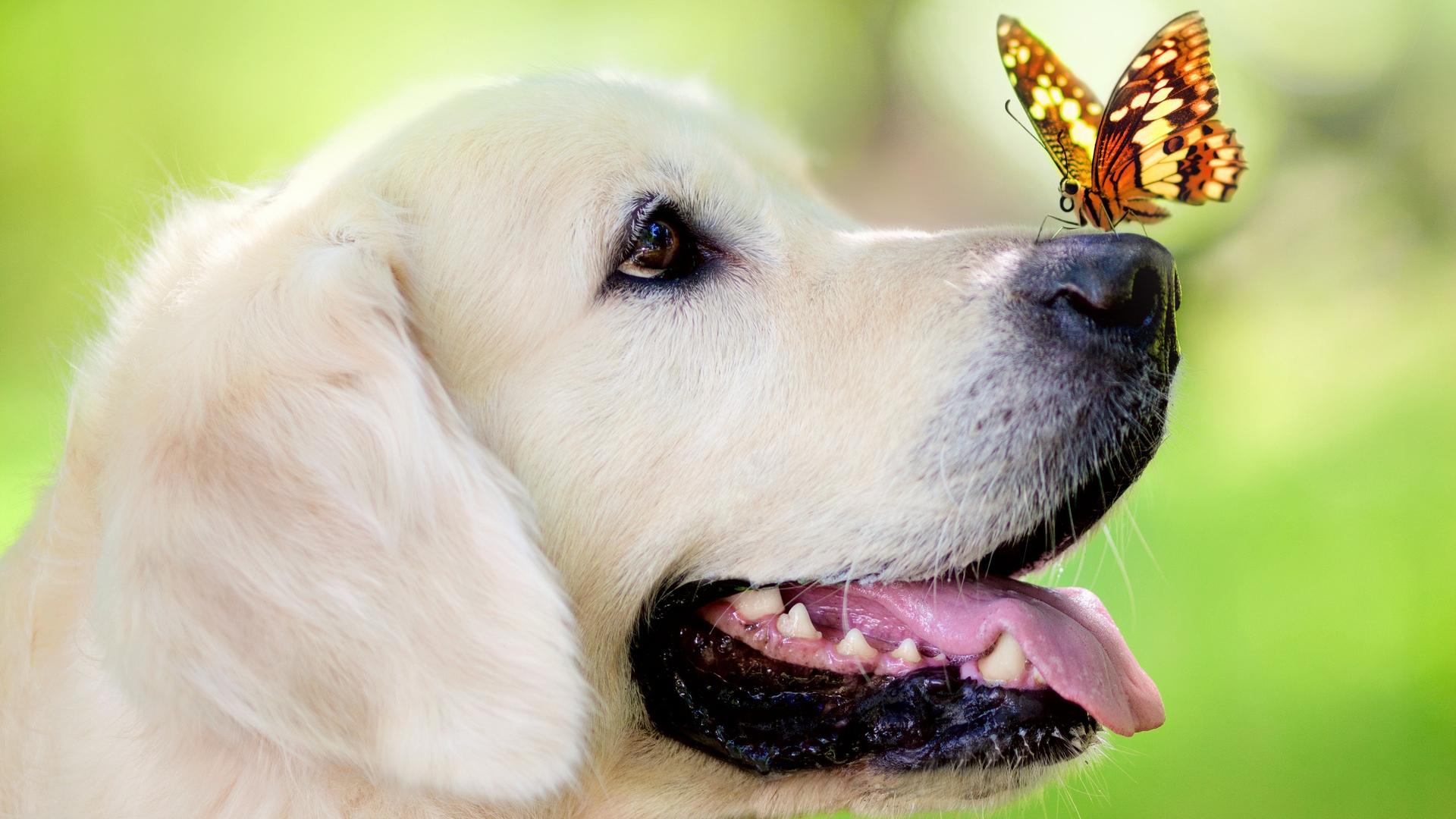 Картинки про собак