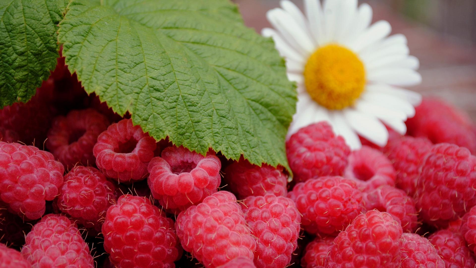 Обои для рабочего стола летние ягоды