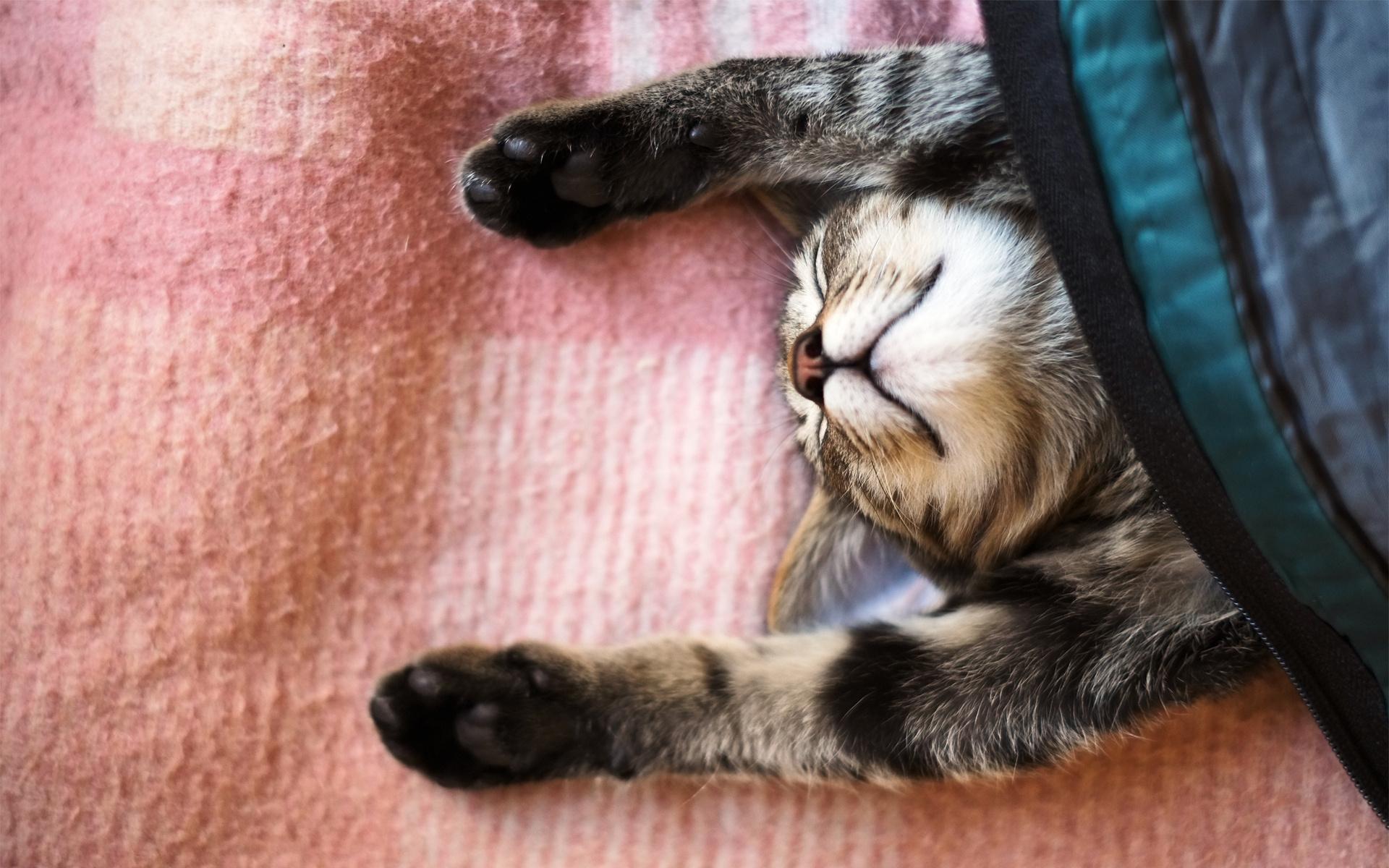 Открыток, картинки приколы кот спит