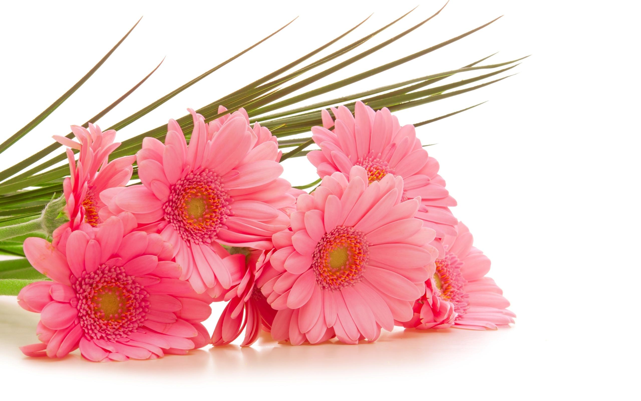 Открытка с цветами на белом фоне